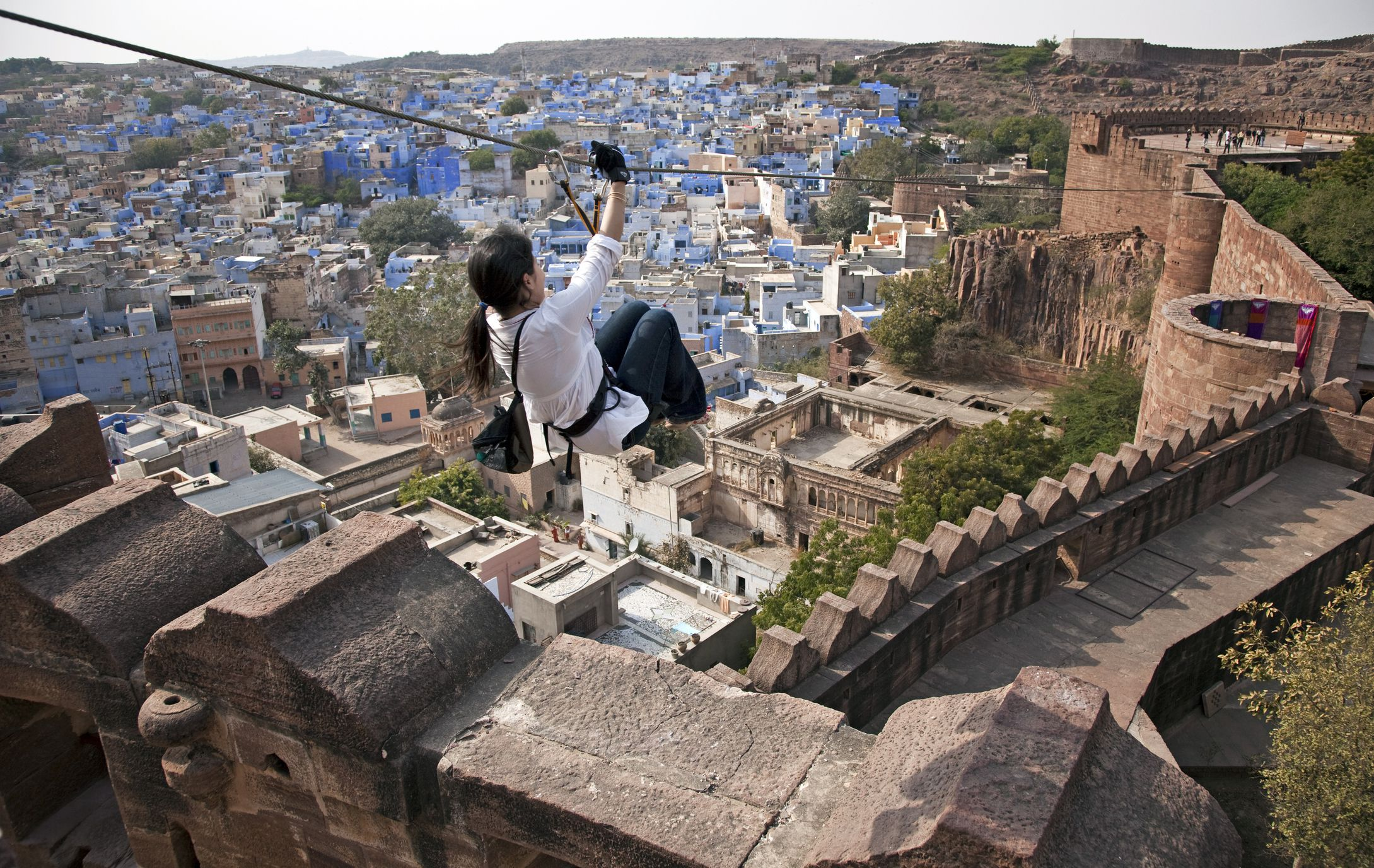 Jodhpur Flying Fox