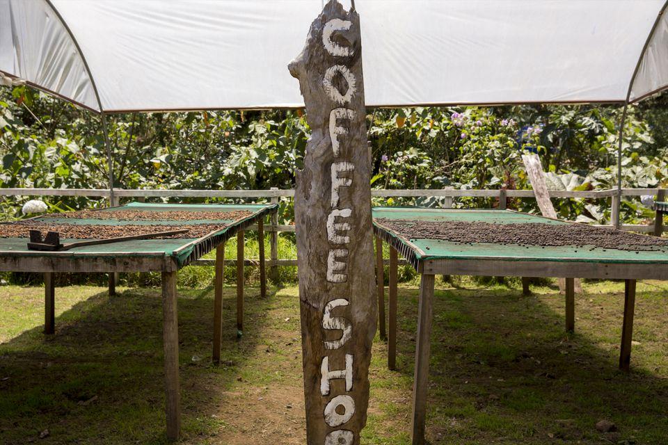 Café en el Volcán Poás