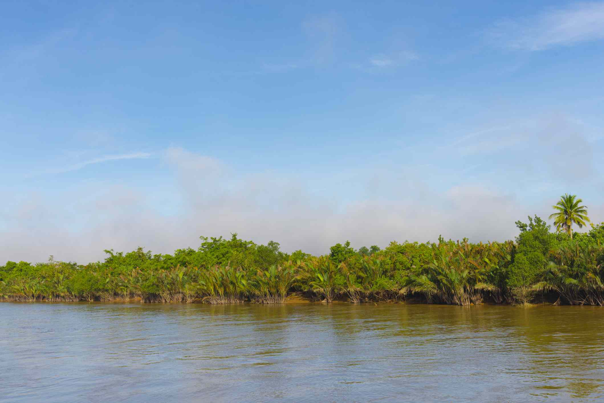View of mangrove trees against a blue sky across a body of water at Oleta River State Park in Miami