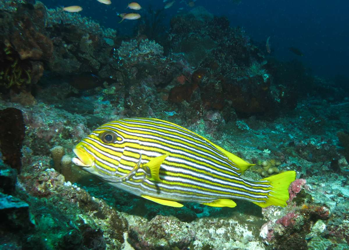A colorful fish on the bottom of the sea
