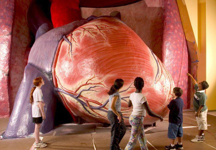 Giant-Heart-Franklin-Institute.jpg