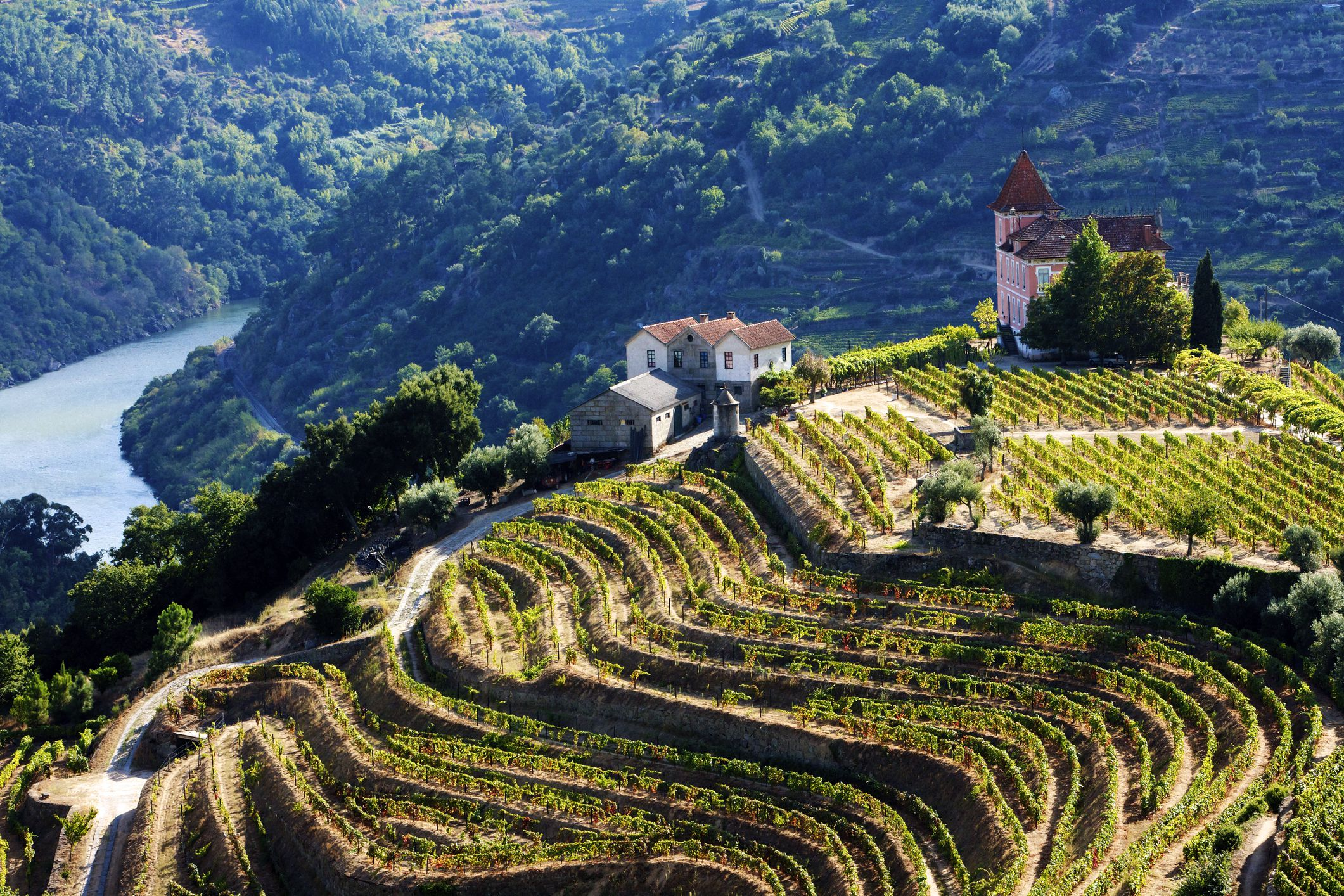 Terraced vineyards of Douro River Valley
