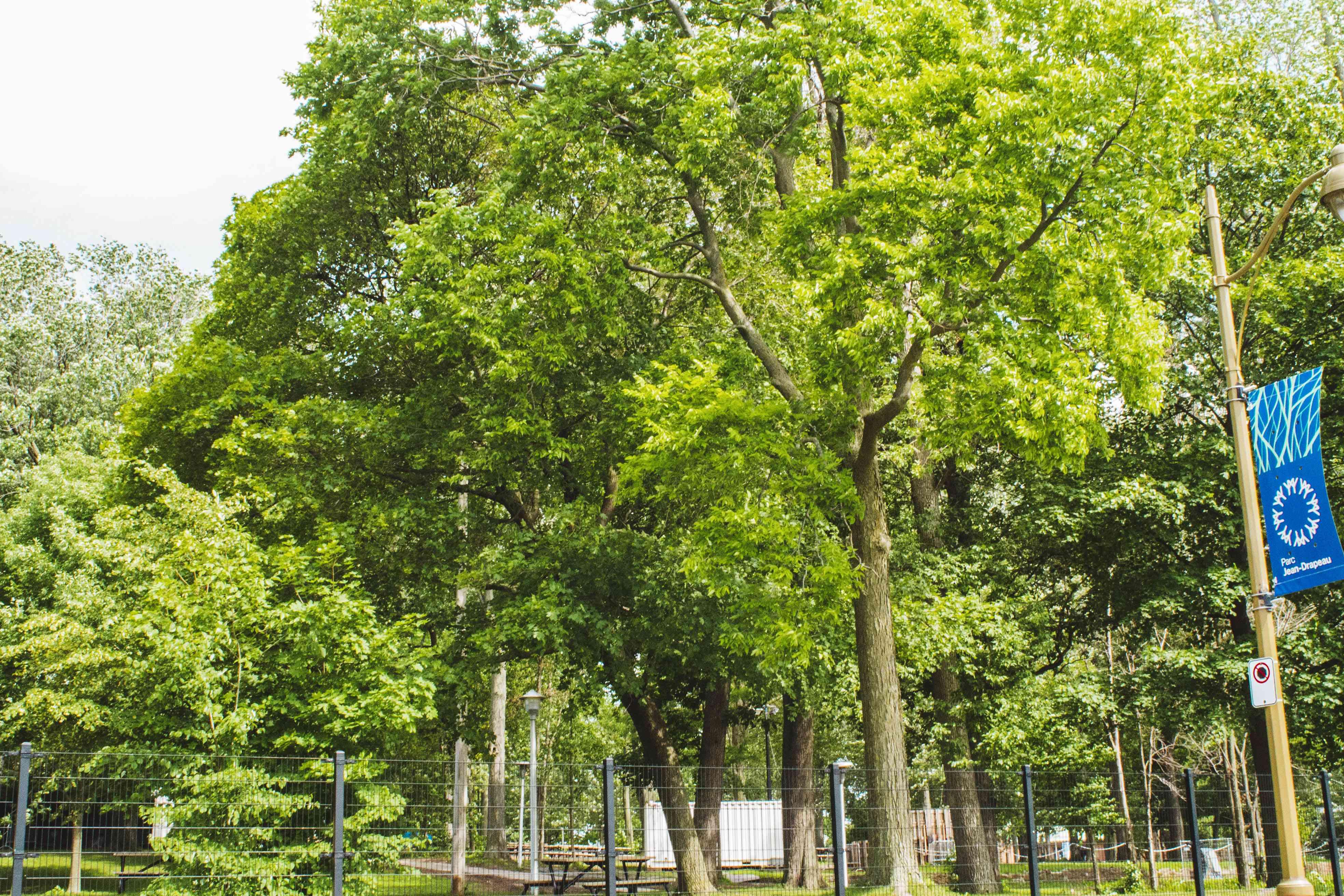 Parc Jean-Drapeau in Montreal