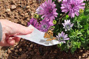 a butterfly at Desert Botanical Garden in Phoenix