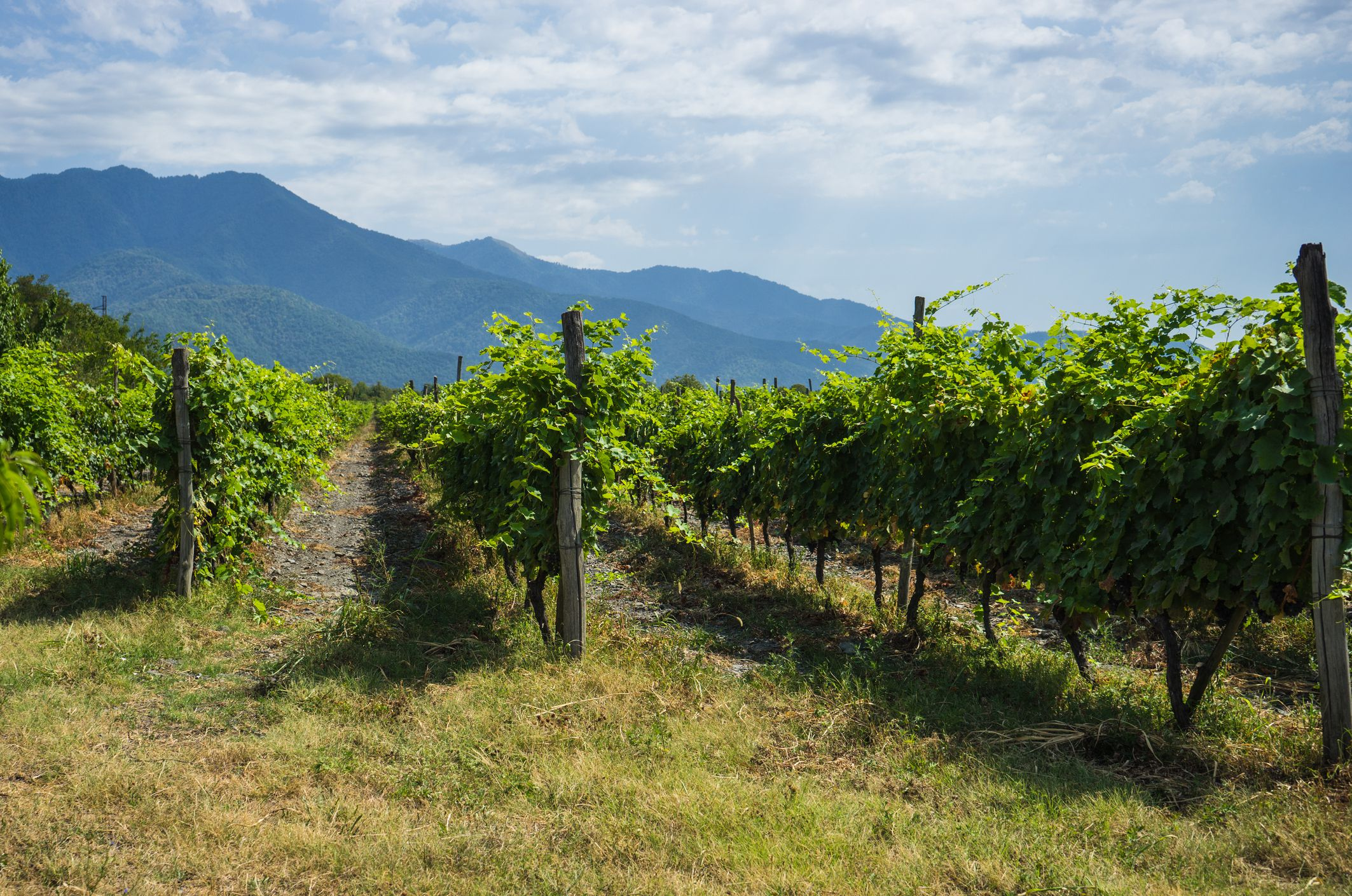 Kakheti Winery
