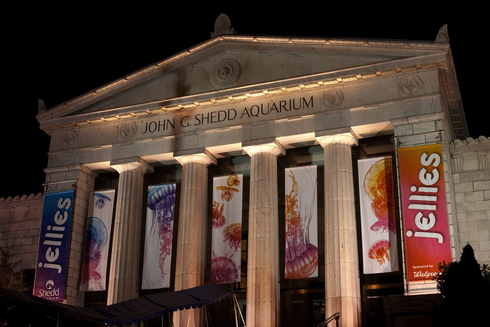 Shedd Aquarium with Jellyfish Exhibit