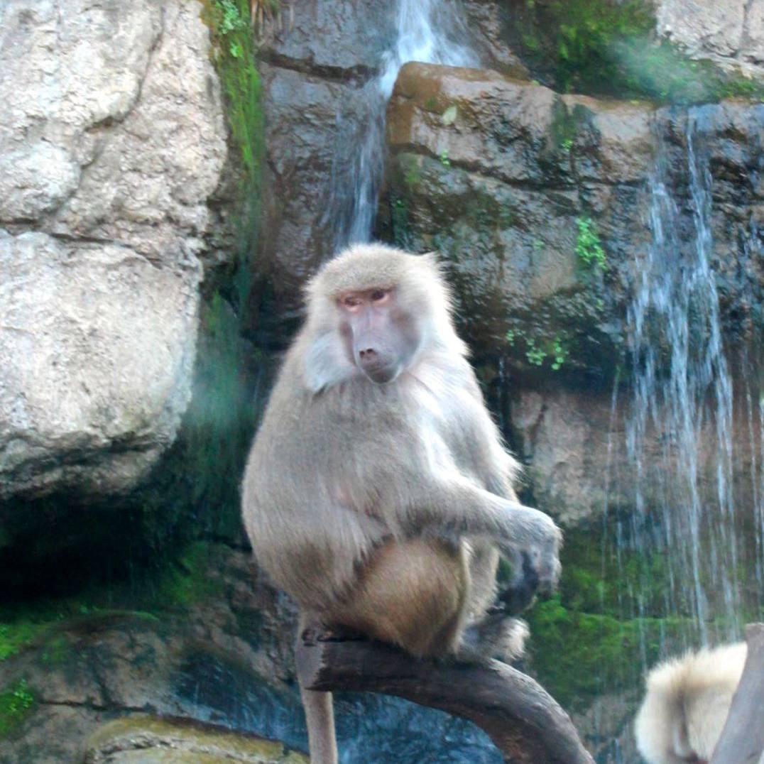 PP-Zoo-baoon-sitting-waiting-in-tree.jpg