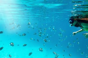 Woman With Fishes Scuba Diving In Sea
