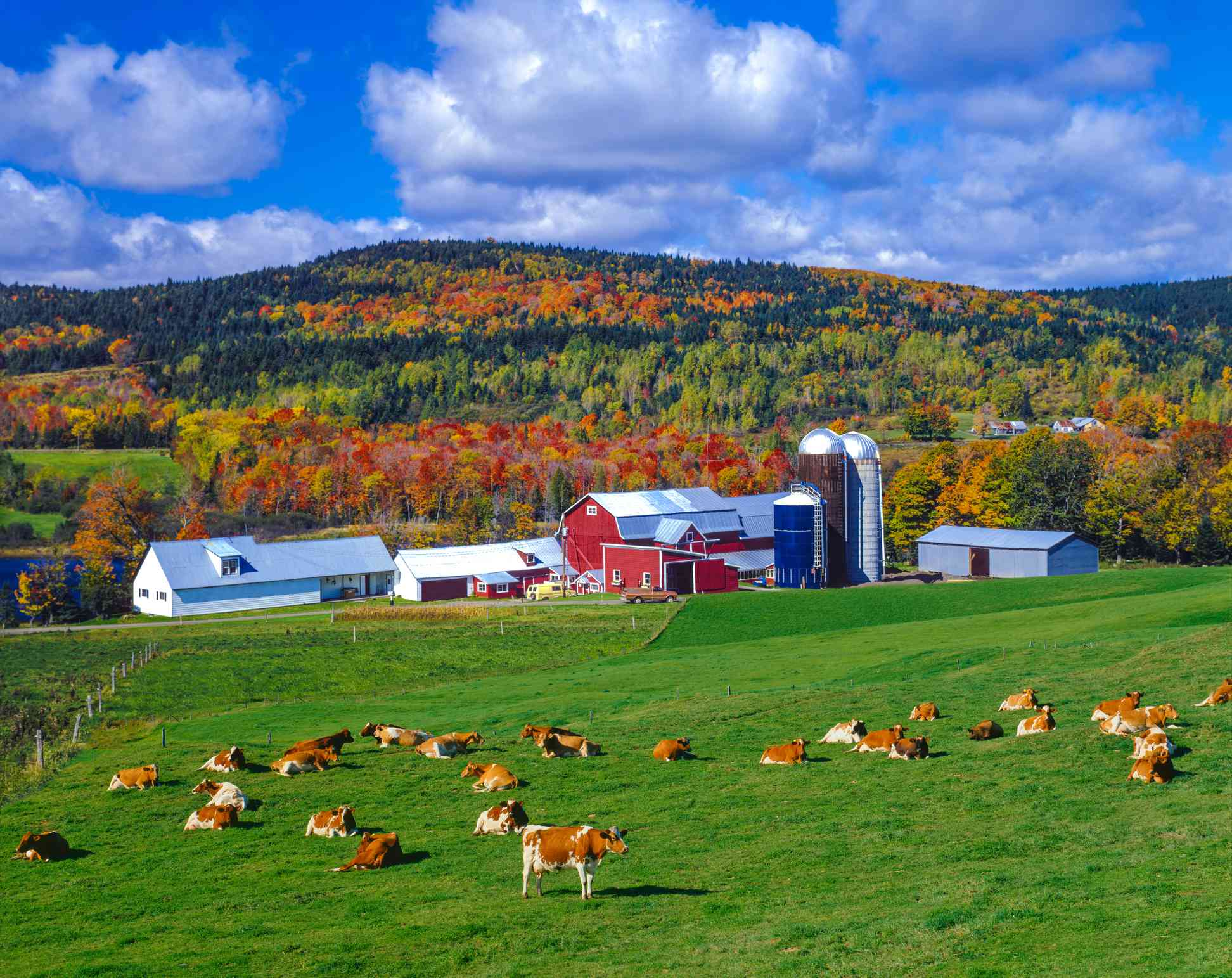 Autumn colors with farm in the Green Mountains, VT