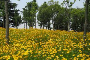 Summer flowers bloom in a Shanghai park