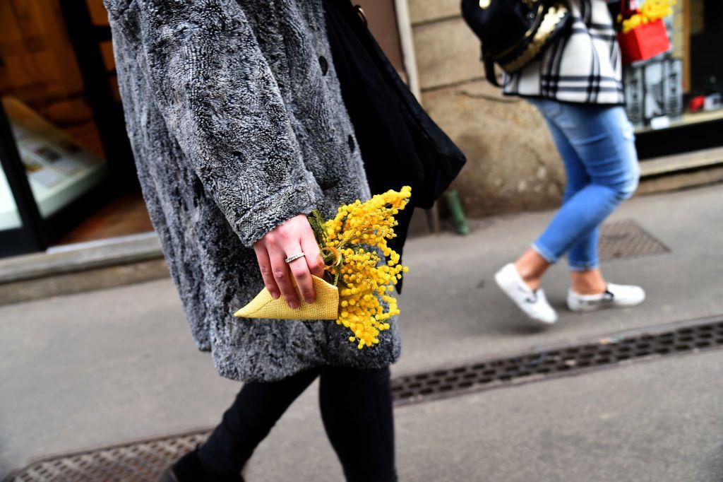 Mimosa flowers - Festa della Donna
