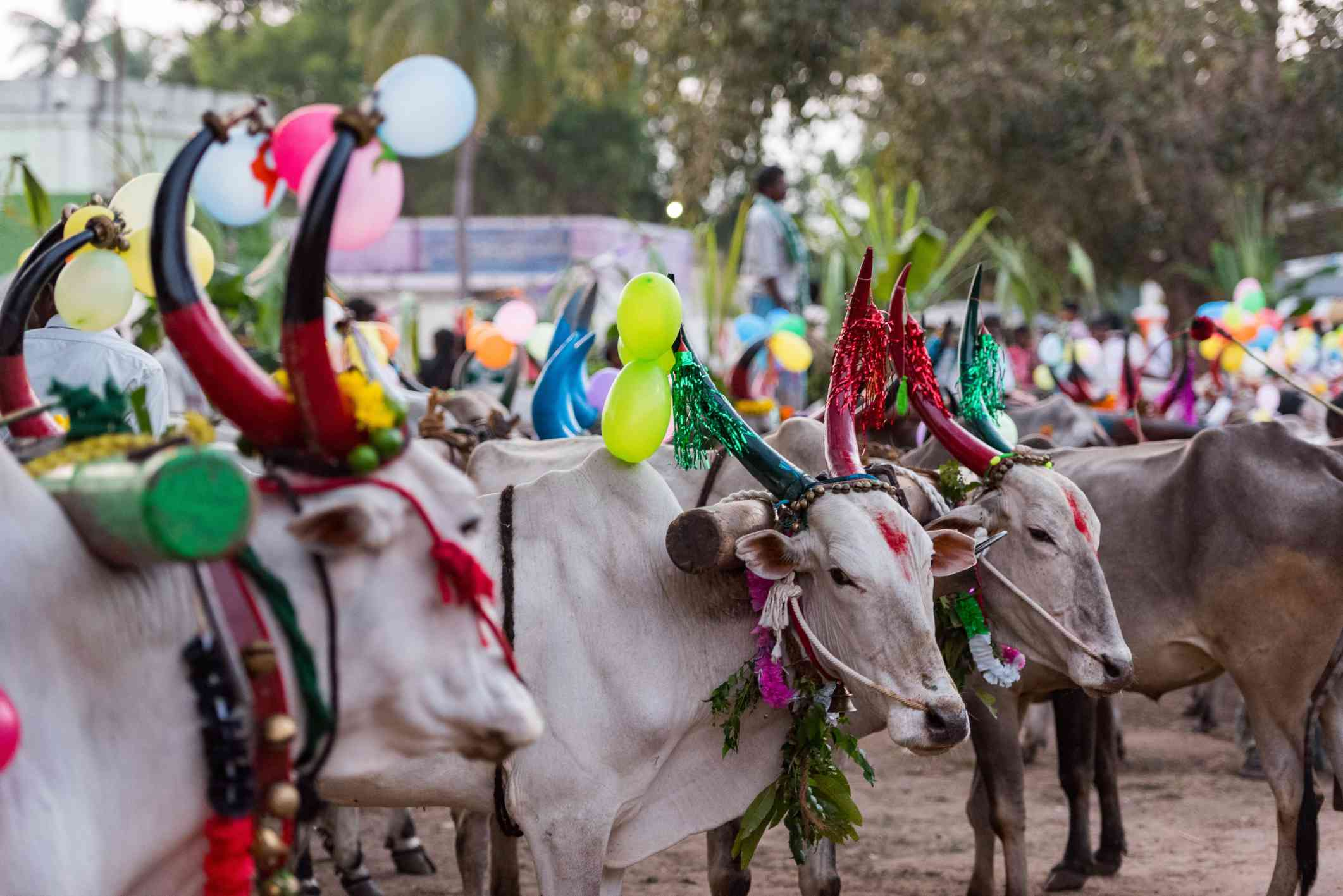 Image result for pongal festival