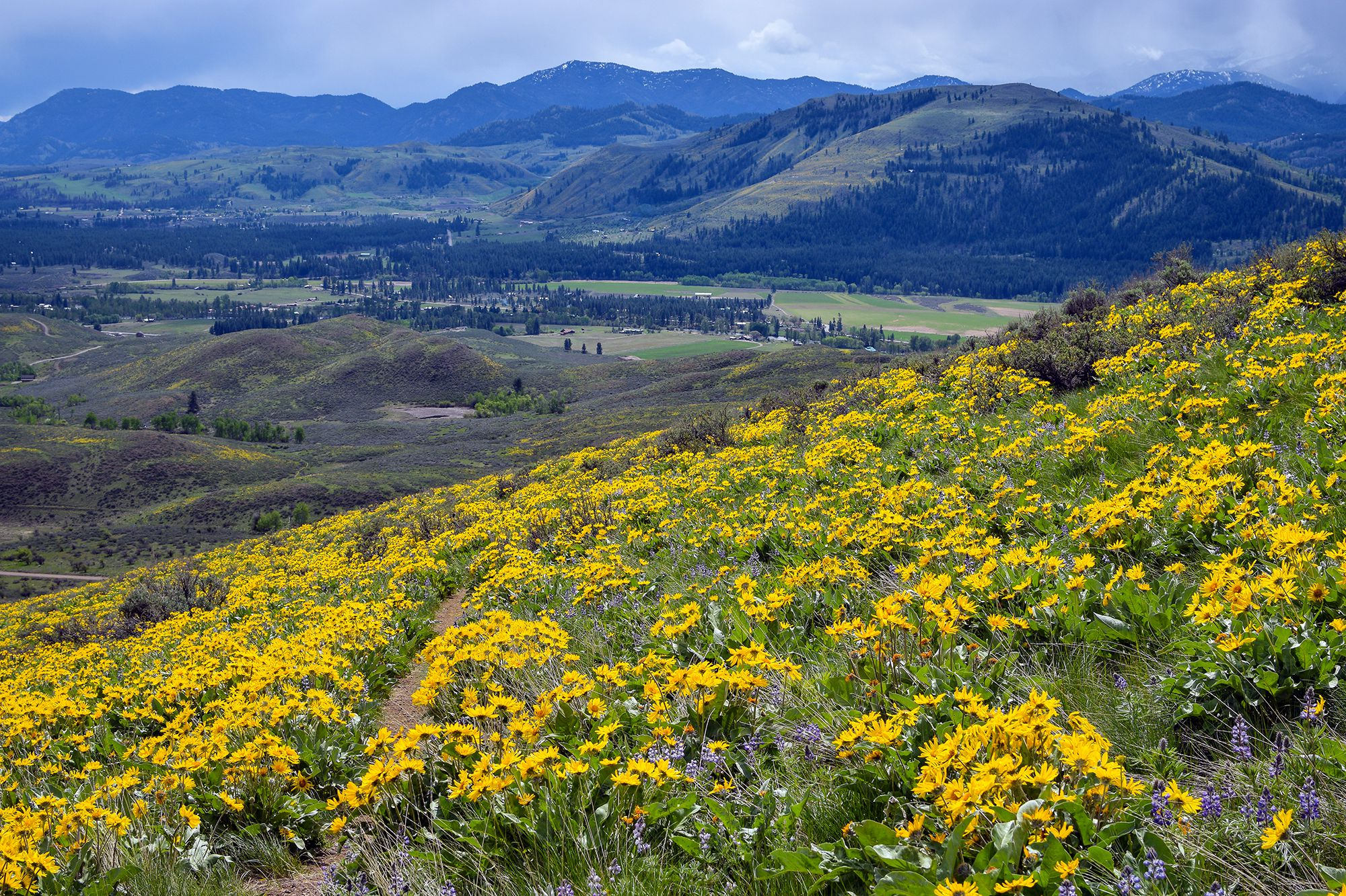 Spring in Methow Valley