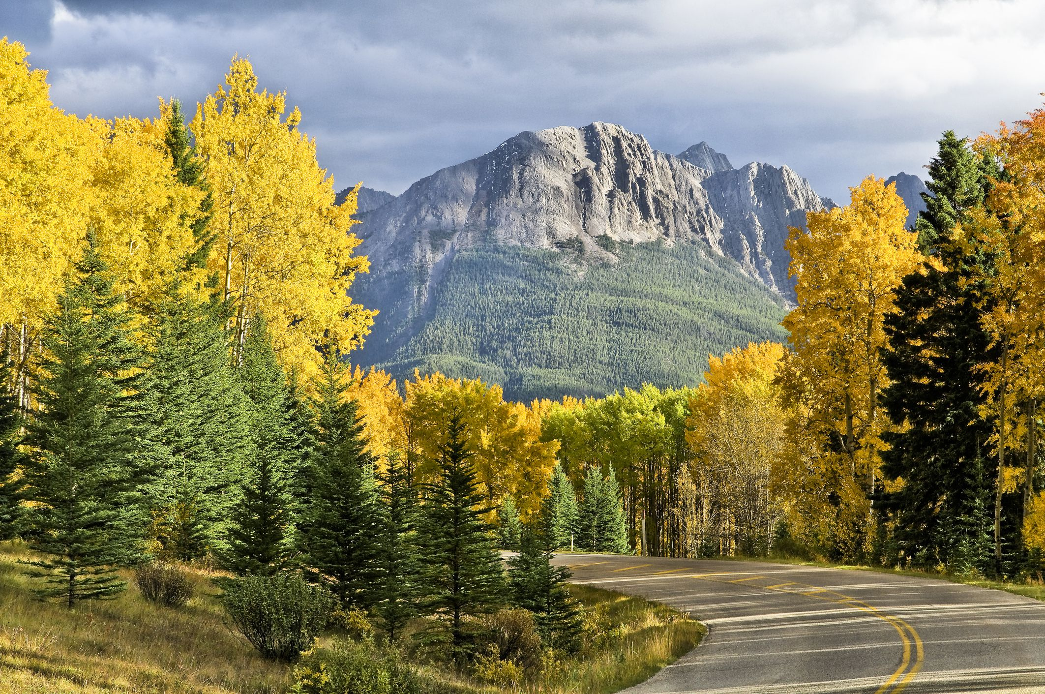 Storm light on aspen, Bow Valley Parkway, Rocky Mountains, Banff National Park, Alberta, Canada