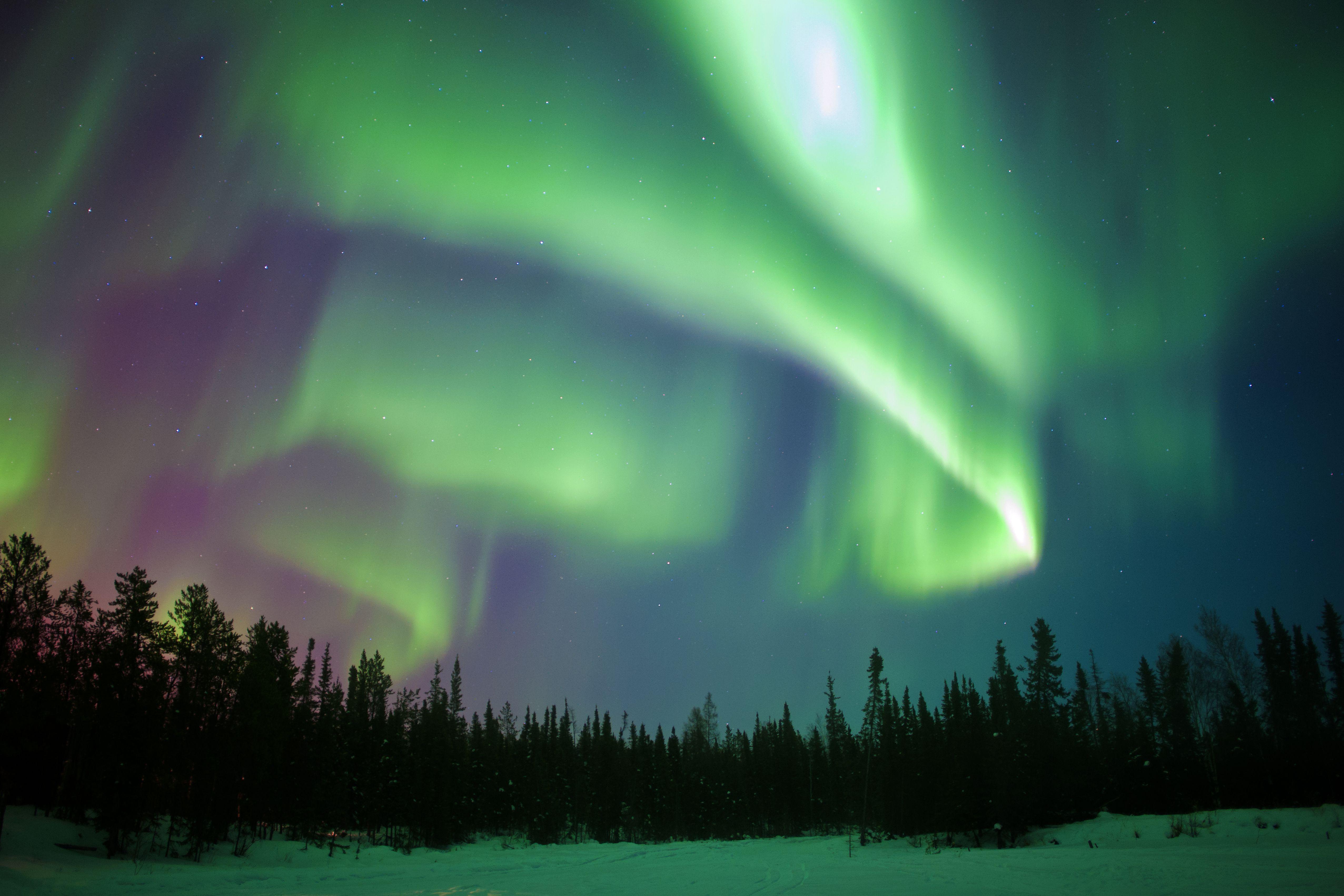 Aurora borealis, Nordlichter, borealen Wald, Yellow Umgebung, NWT, Kanada Aurora borealis, Nordlichter, borealen Wald, Umgebung Yellow, NWT, Kanada