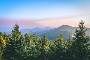 evergreen trees with mountain tops in the distant background