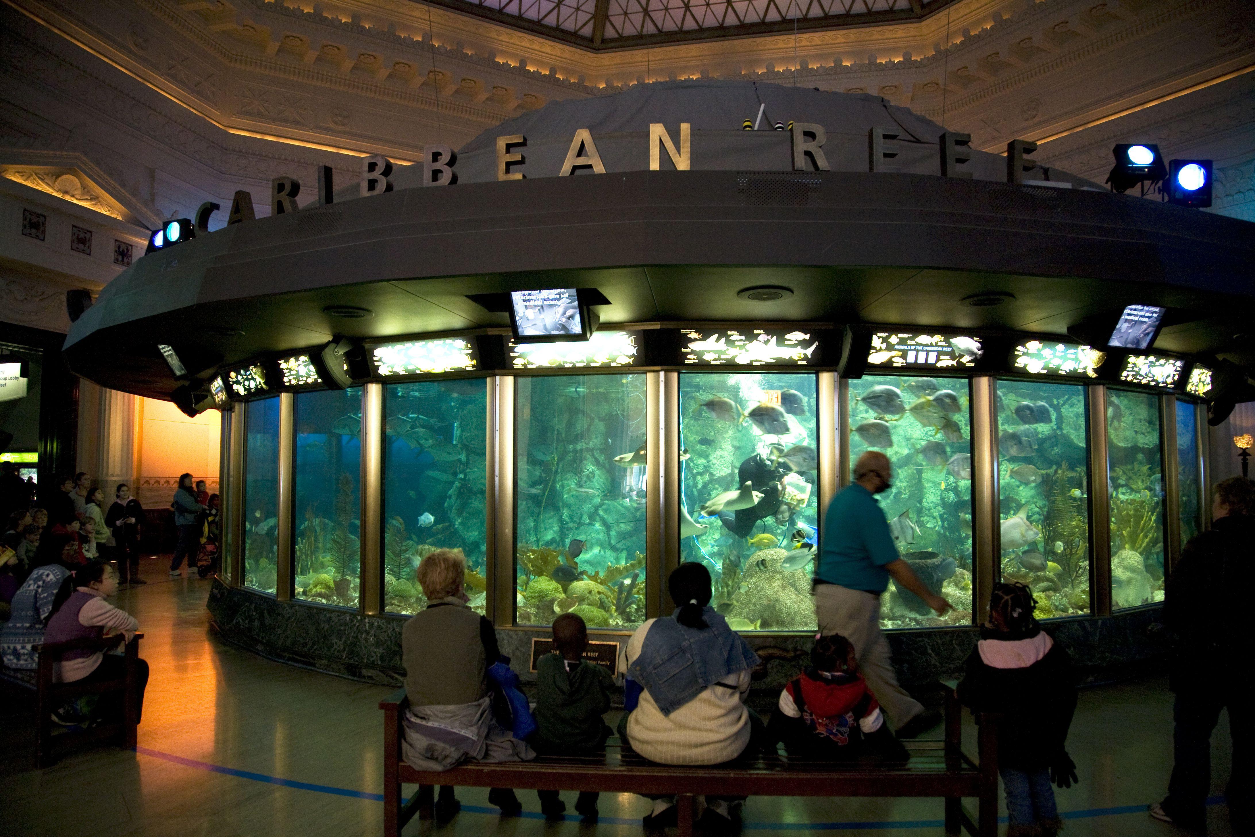 Guide To Chicago S Shedd Aquarium