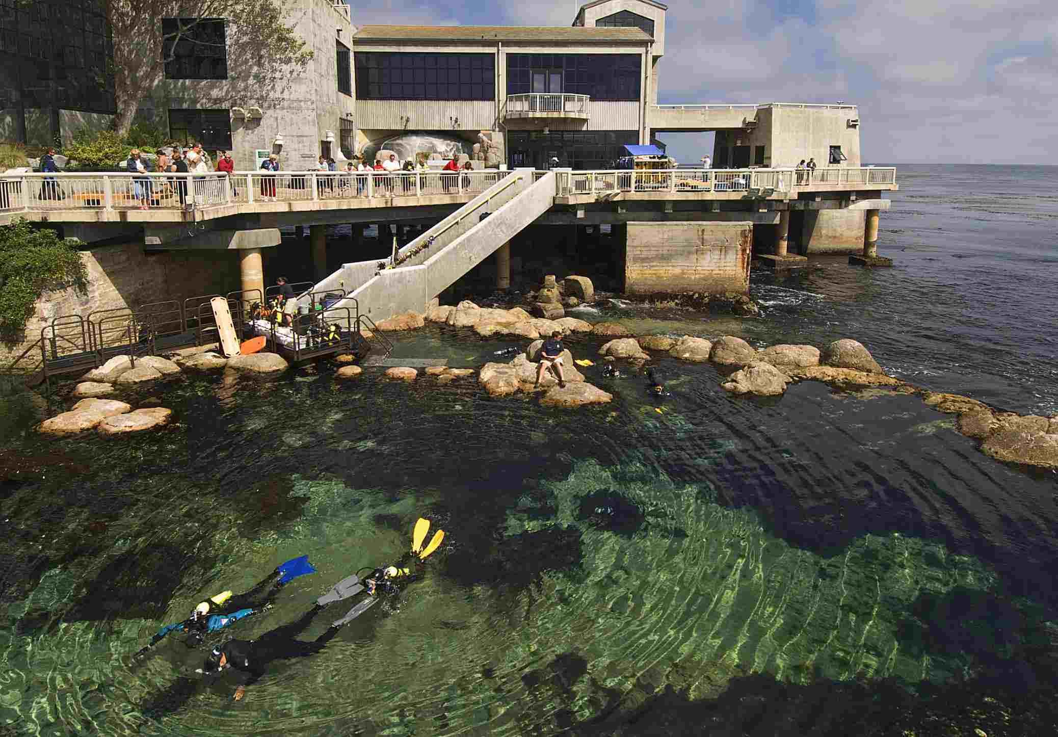 Novice divers expore man made tidal pool, Monterey Bay Aquarium.