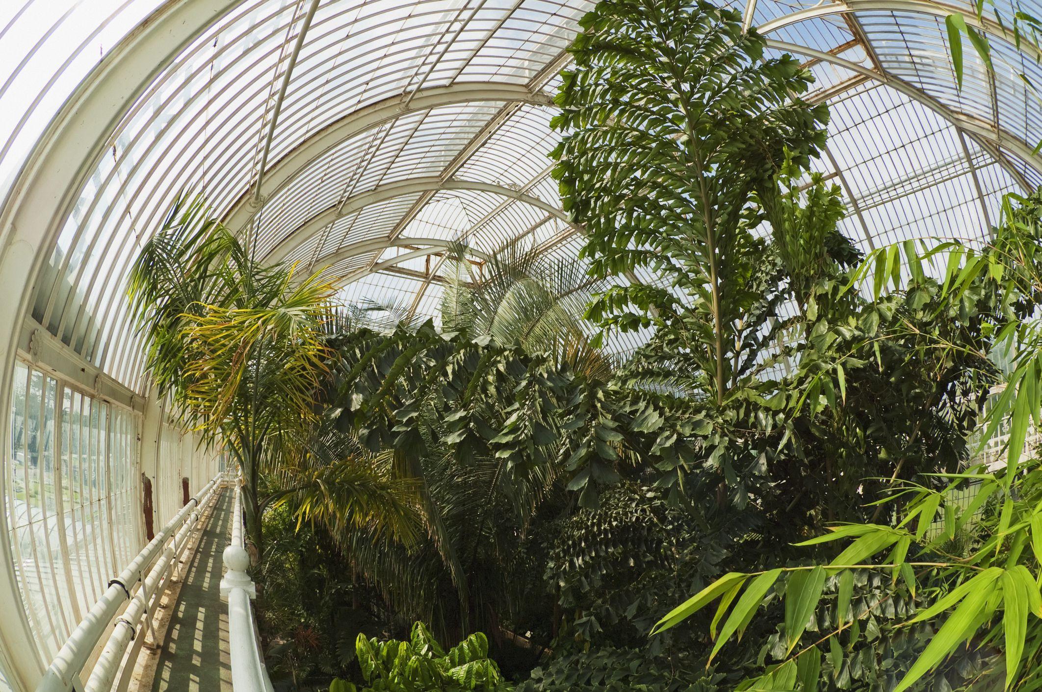 Palm House at Royal Botanic Gardens, Kew, Surrey, England, United Kingdom