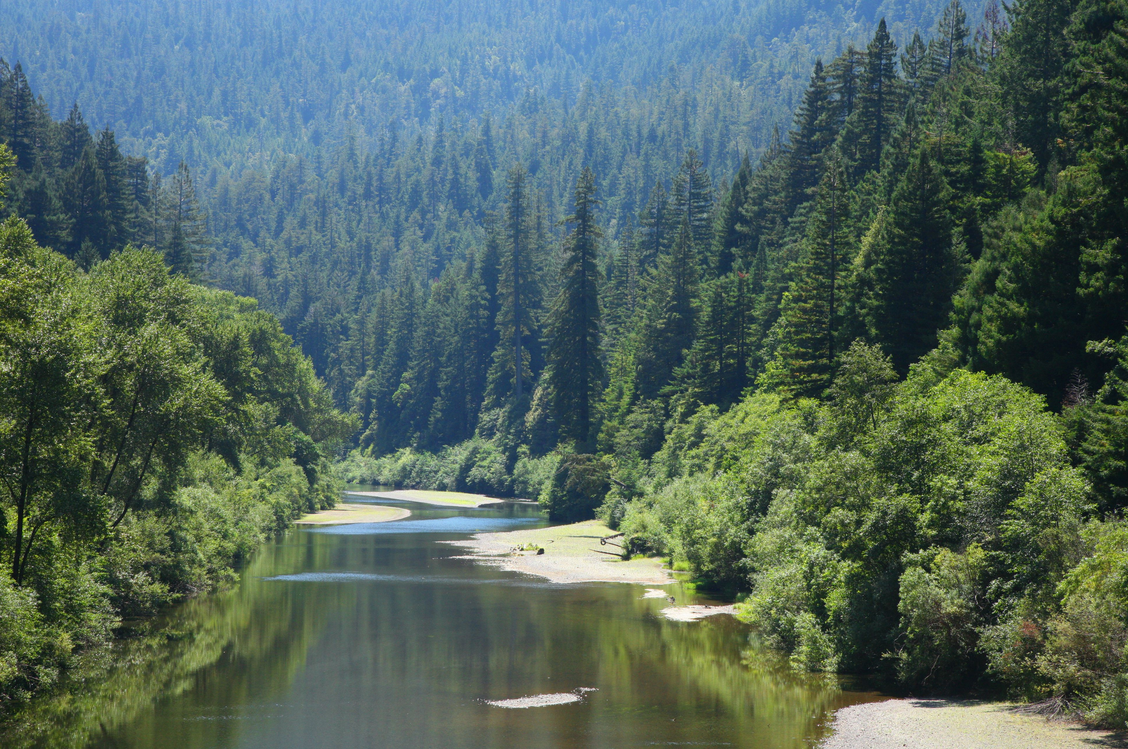 Eel River through old growth redwood forest