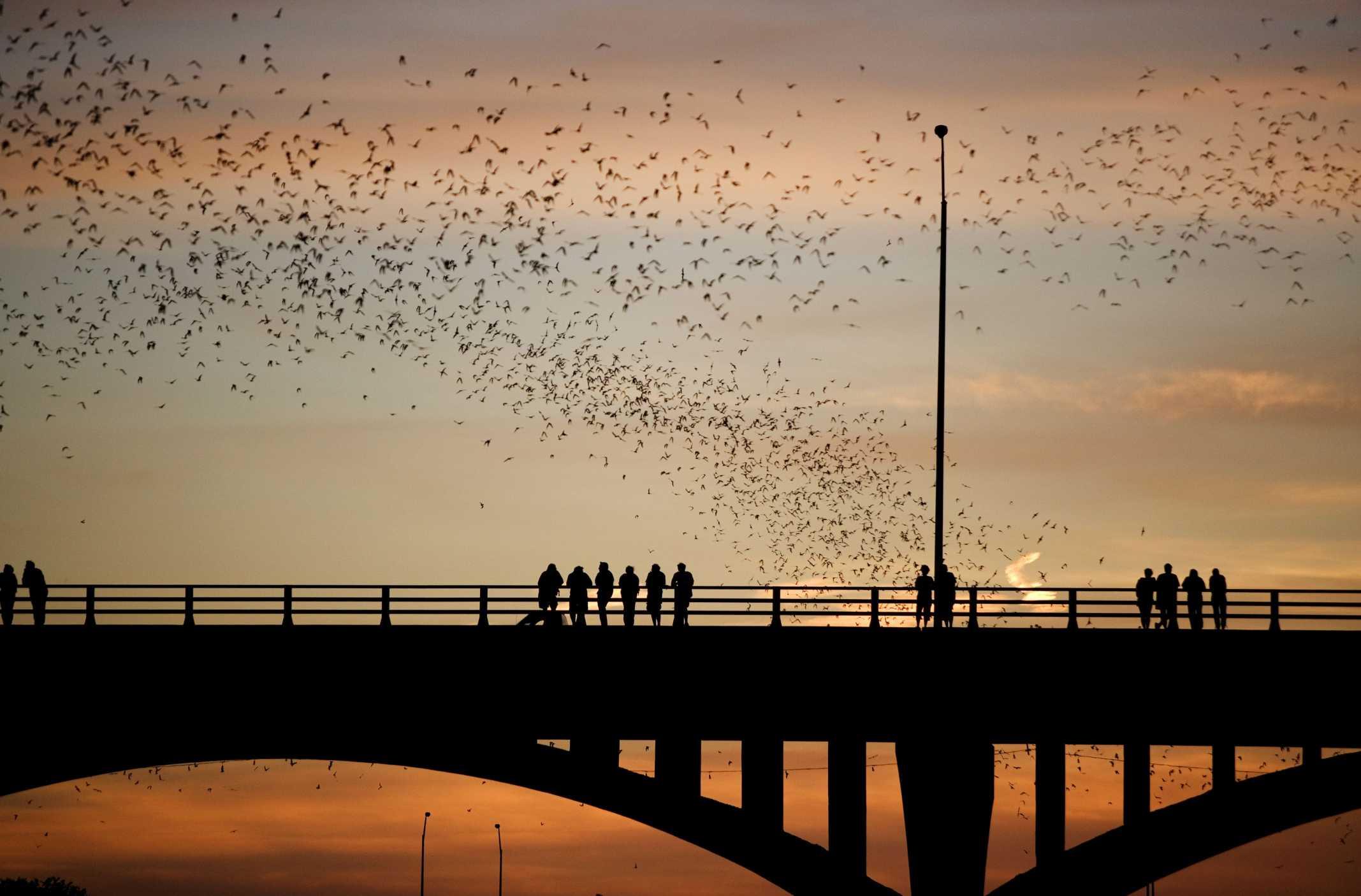 Austin-bat-bridge.jpg