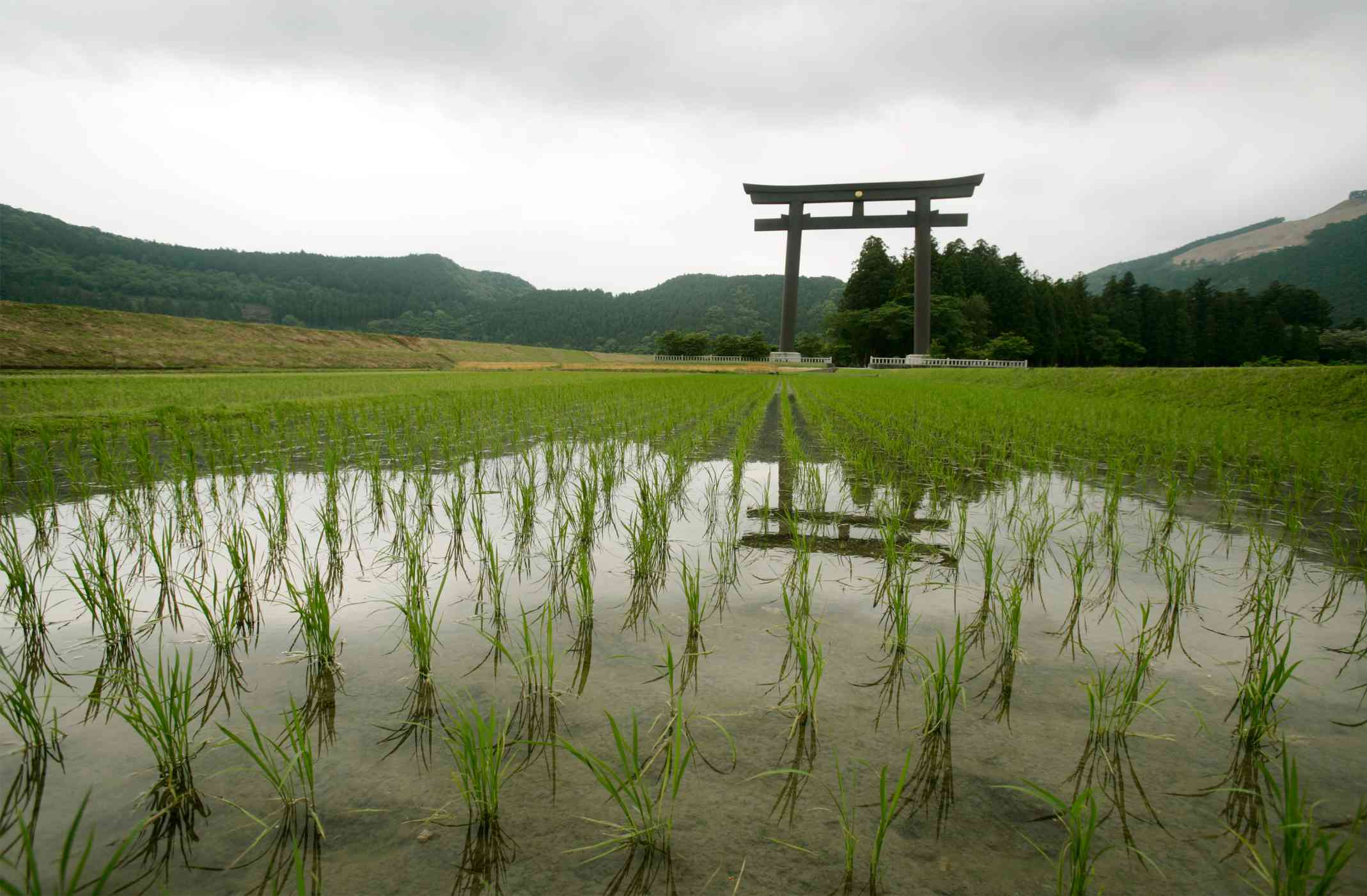torii gate kumano trail