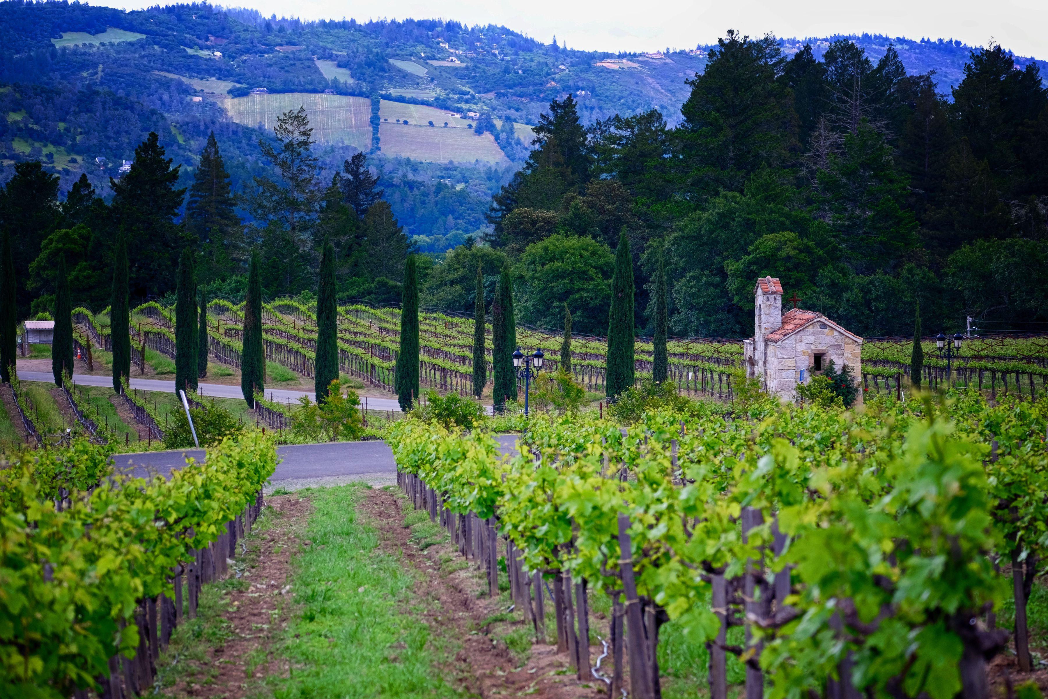 Vineyards in Calistoga, California