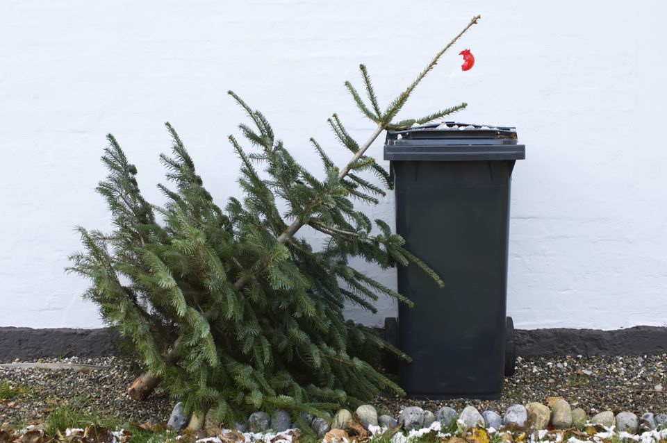 ChristmasTreeGetty.jpg
