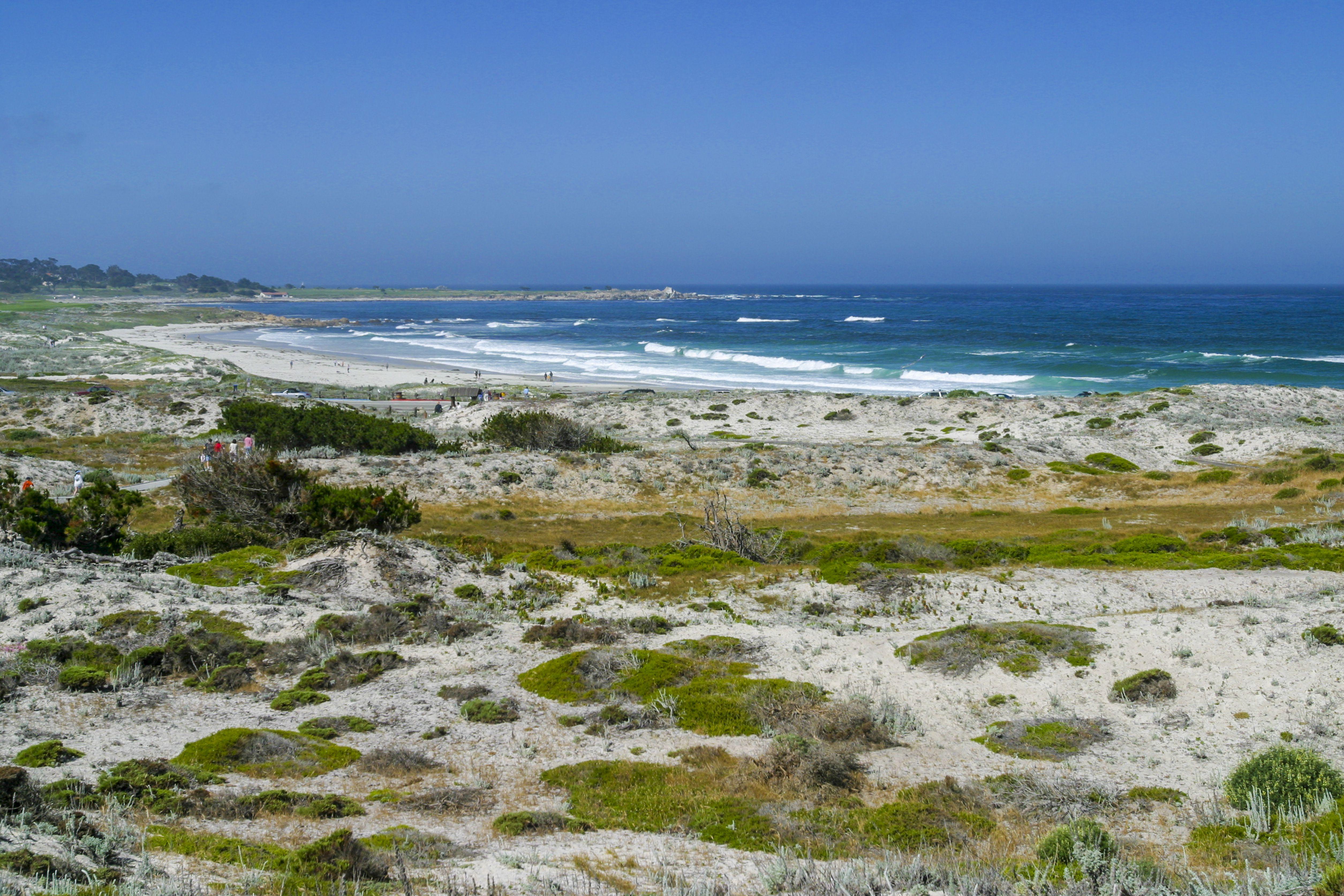 Asilomar Beach and Dune Preserve