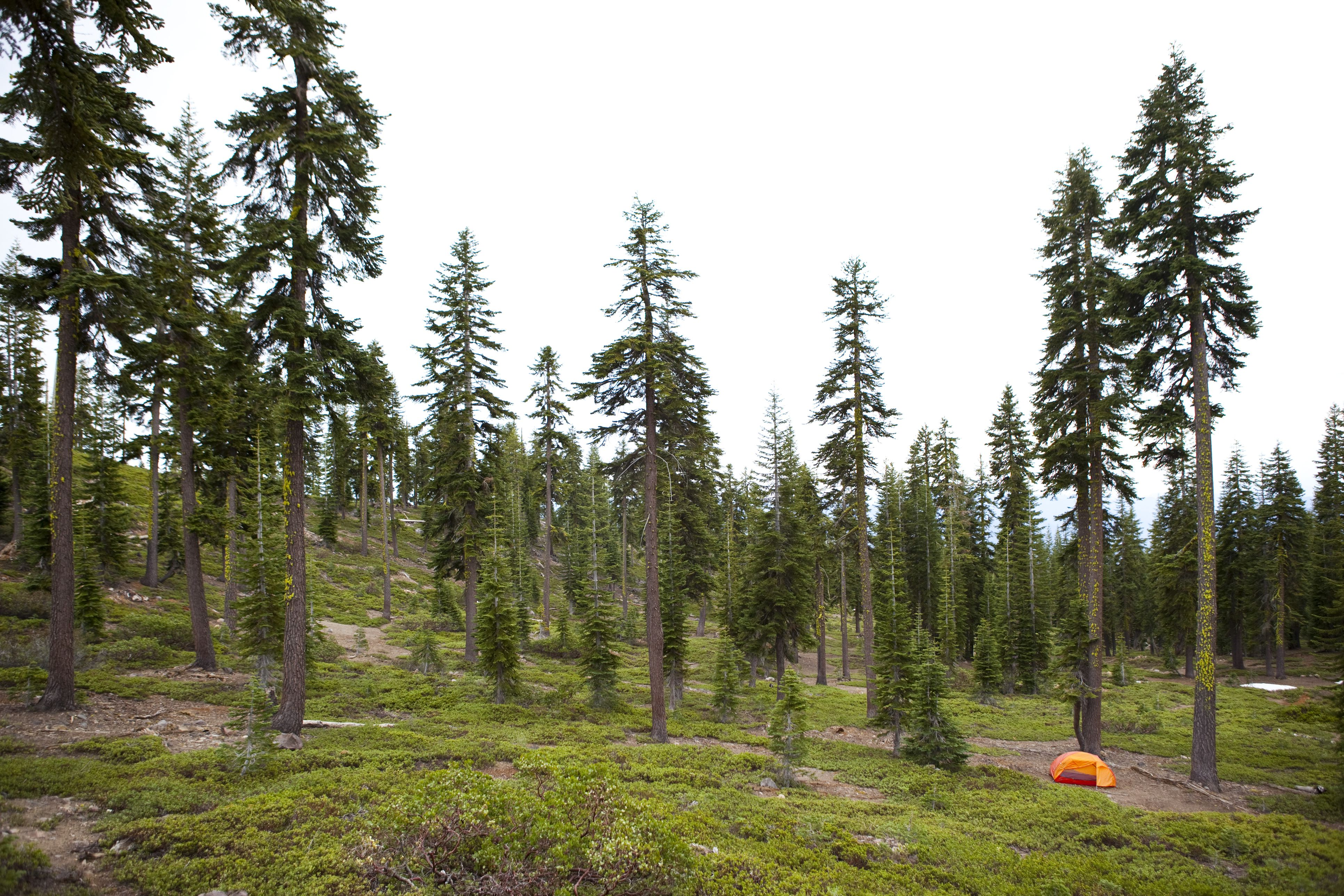 A summer day camping at the foot of Mt. Shasta