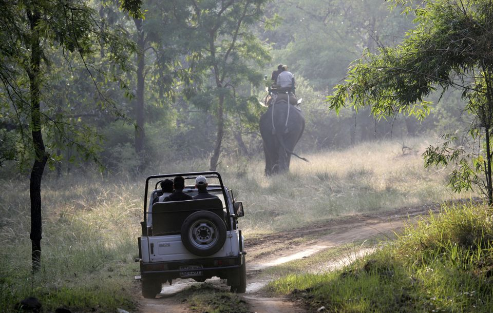 Kanha and Bandhavgarh Park Safari Cost for 2019-20
