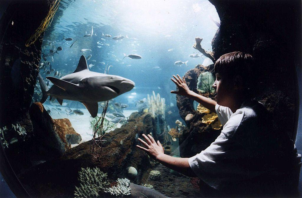 Newport Aquarium Is In Kentucky, Just South Of Cincinnati