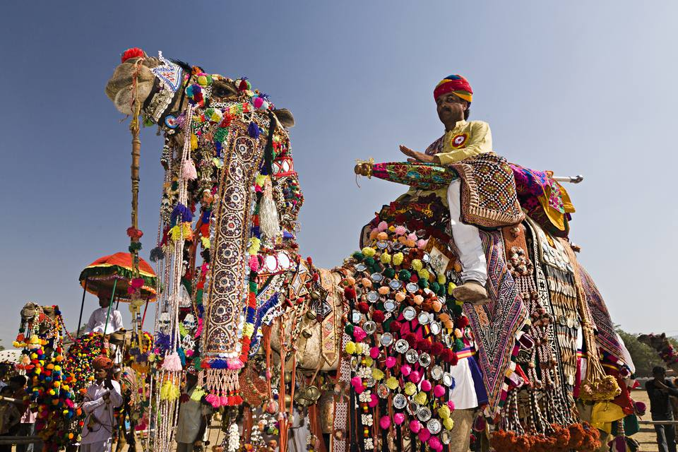 Decorated camel at the Pushkar Fair.
