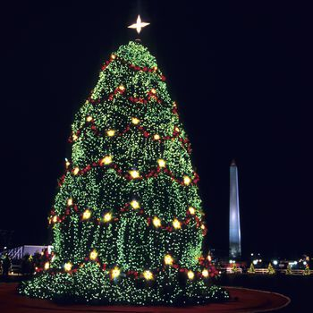 national christmas tree by the white house - Free Christmas Trees For Low Income Families