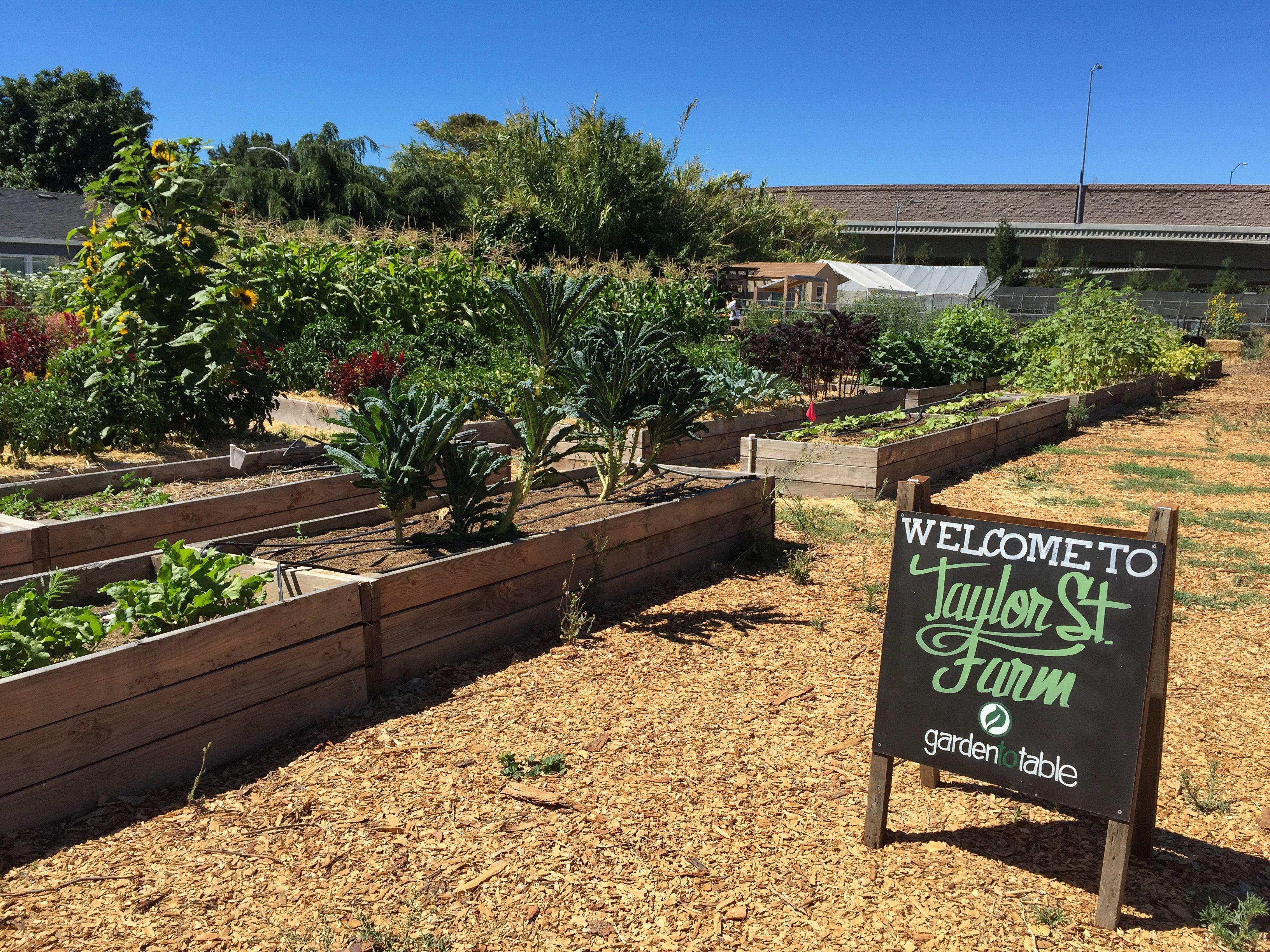 The Taylor Street Farm, Urban Farm in San Jose