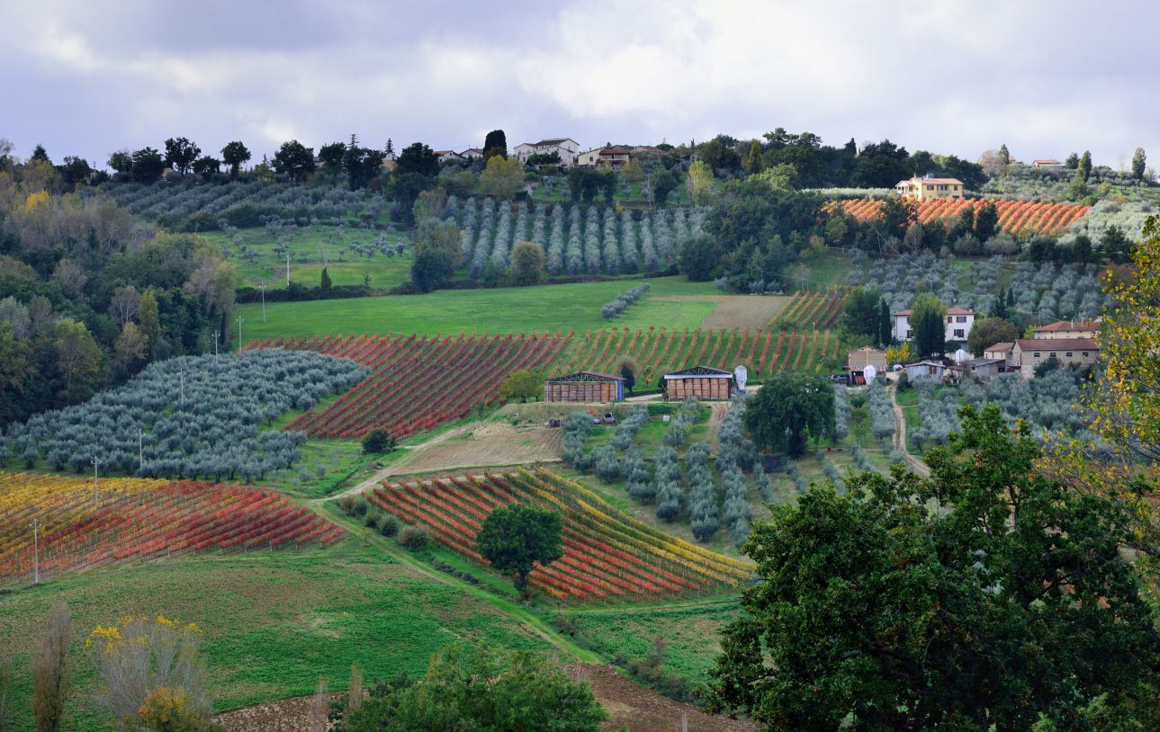 Montefalco And Sangrantino Wineries In Umbria Italy