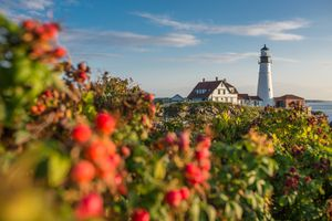 Rose Hip and Portland Head Lighthouse in Maine