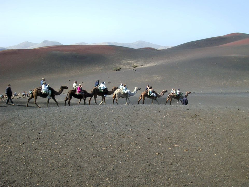 Riding a camel on Lanzarote in the Canary Islands