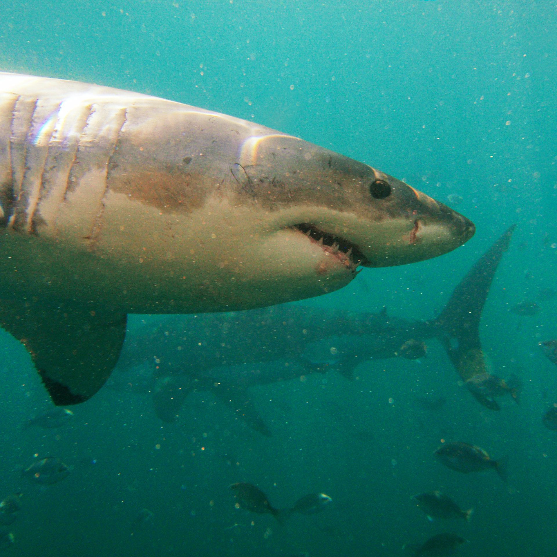 Five Reasons Travelers Shouldn't Fear Sharks