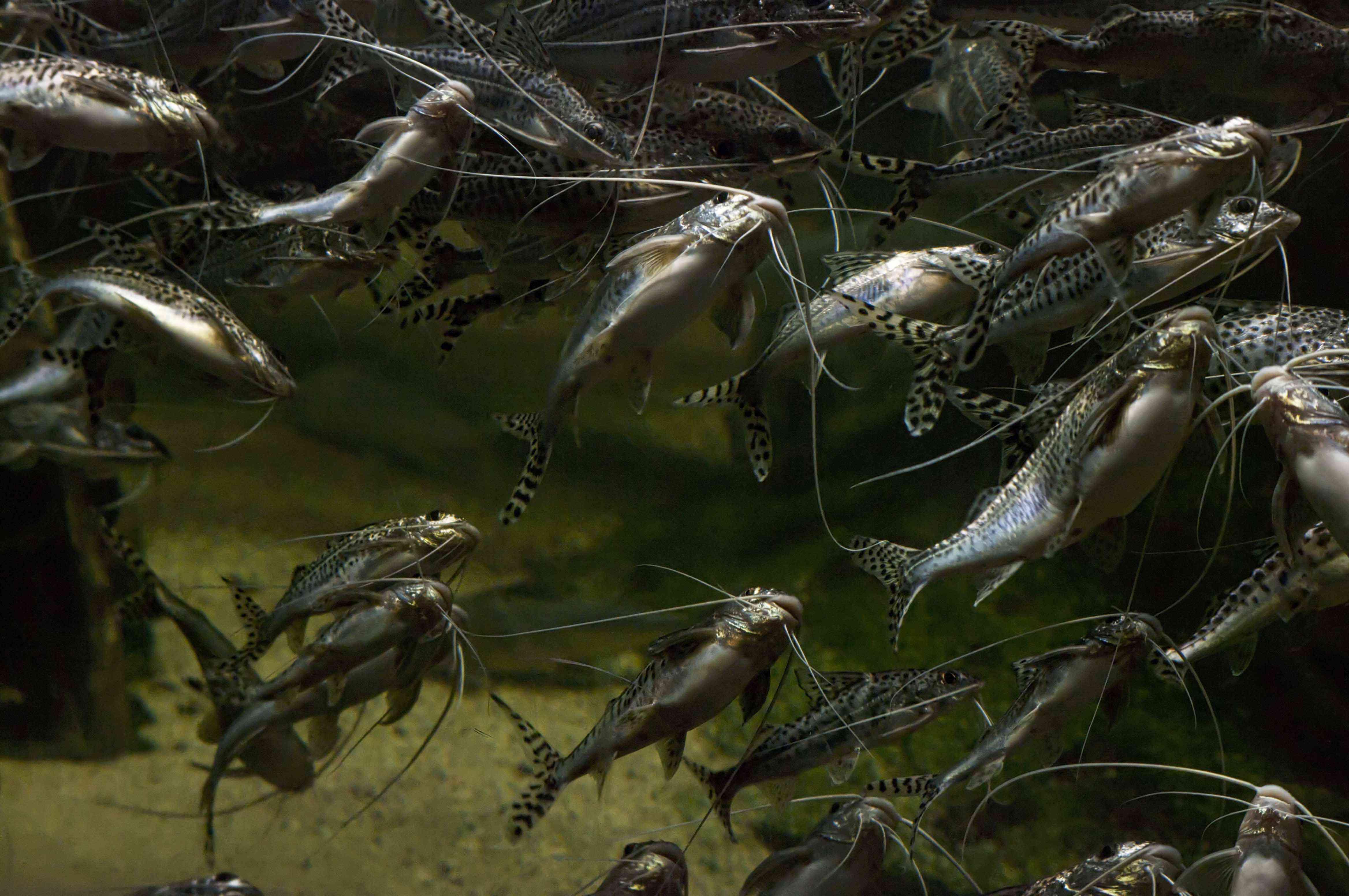 Fish an the Shedd Aquarium