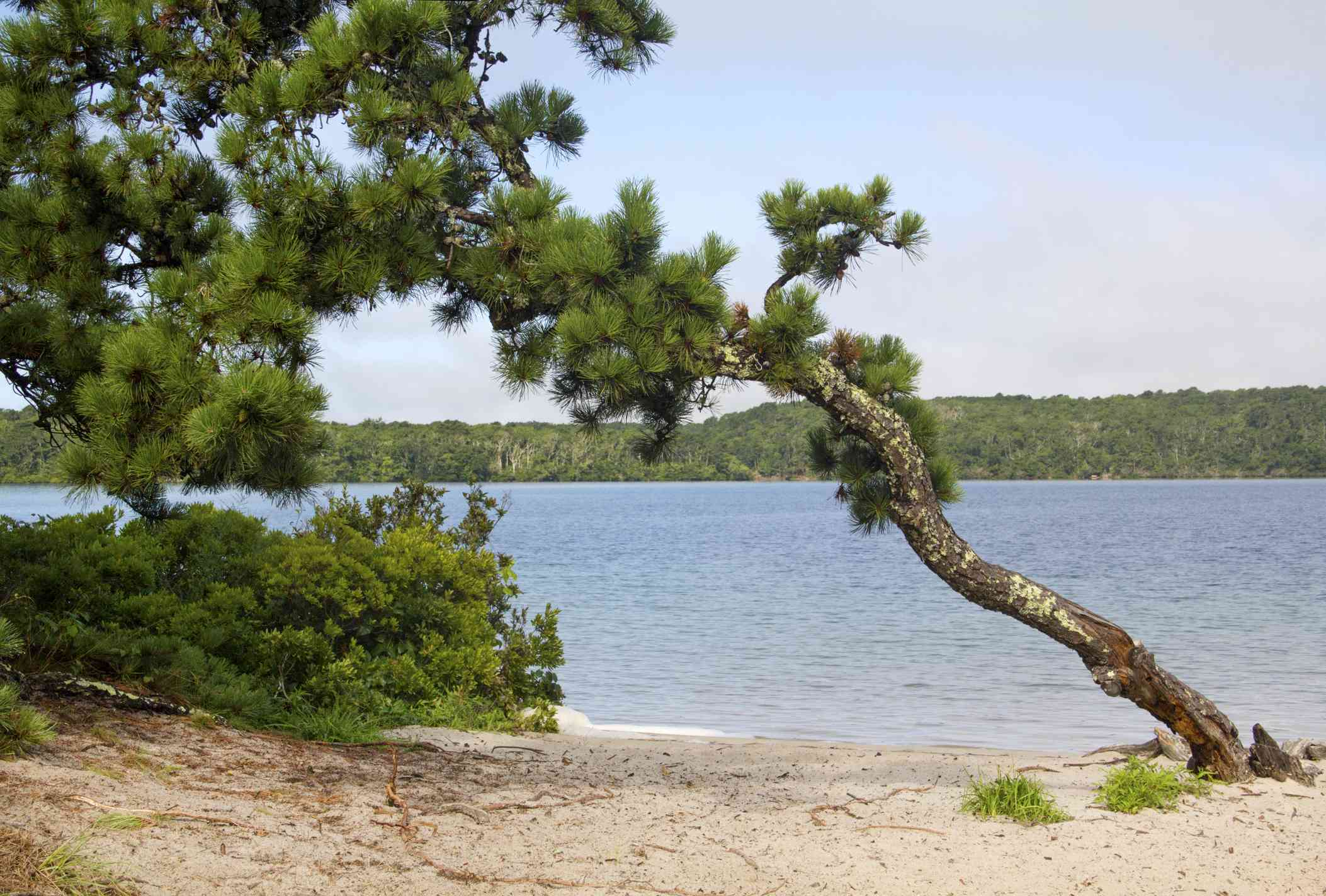 Cliff Pond in Nickerson State Park on Cape Cod.