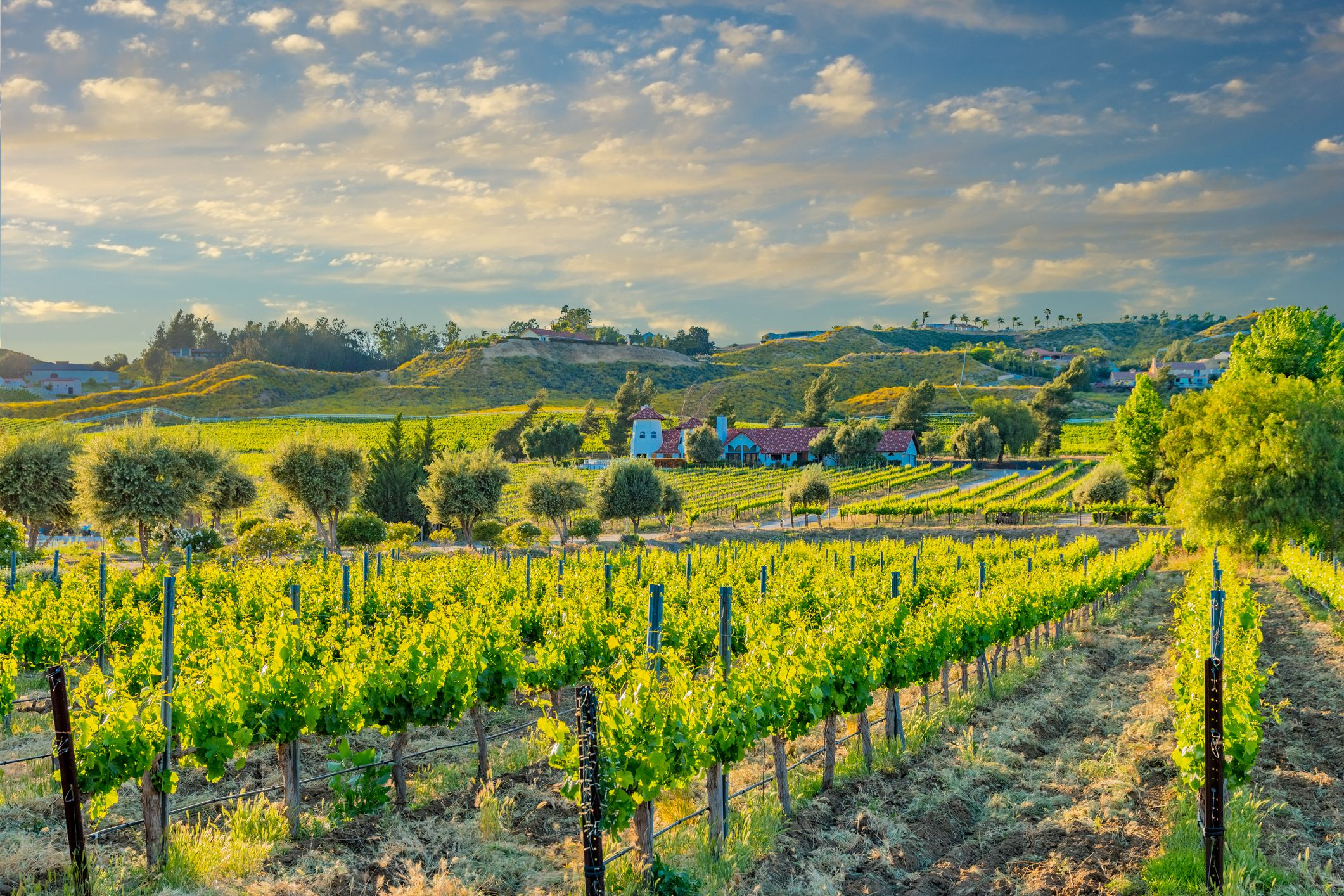The Top 10 Things to Do in California's Temecula Valley
