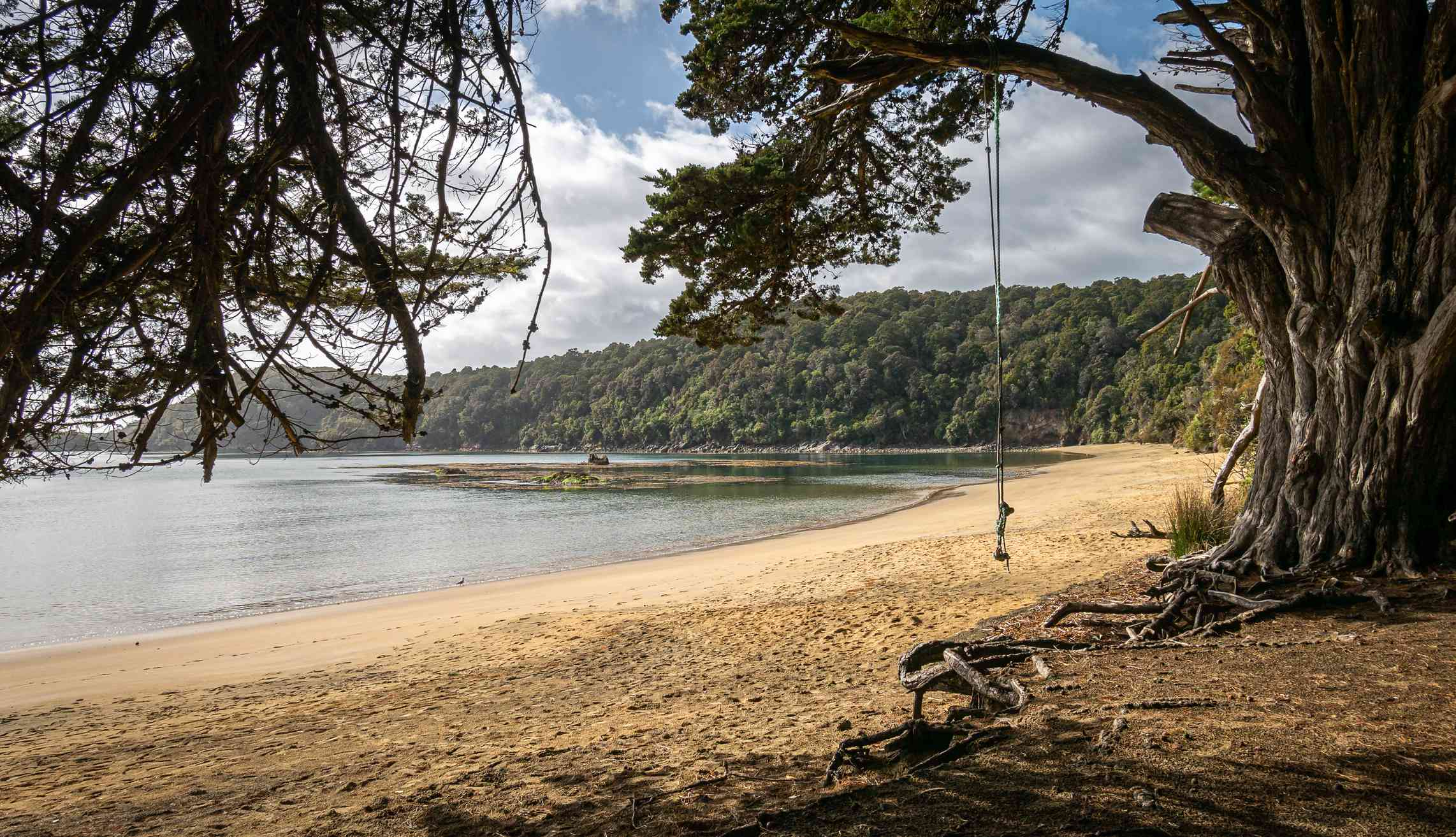 golden sand beach with sprawling tree and a rope swing