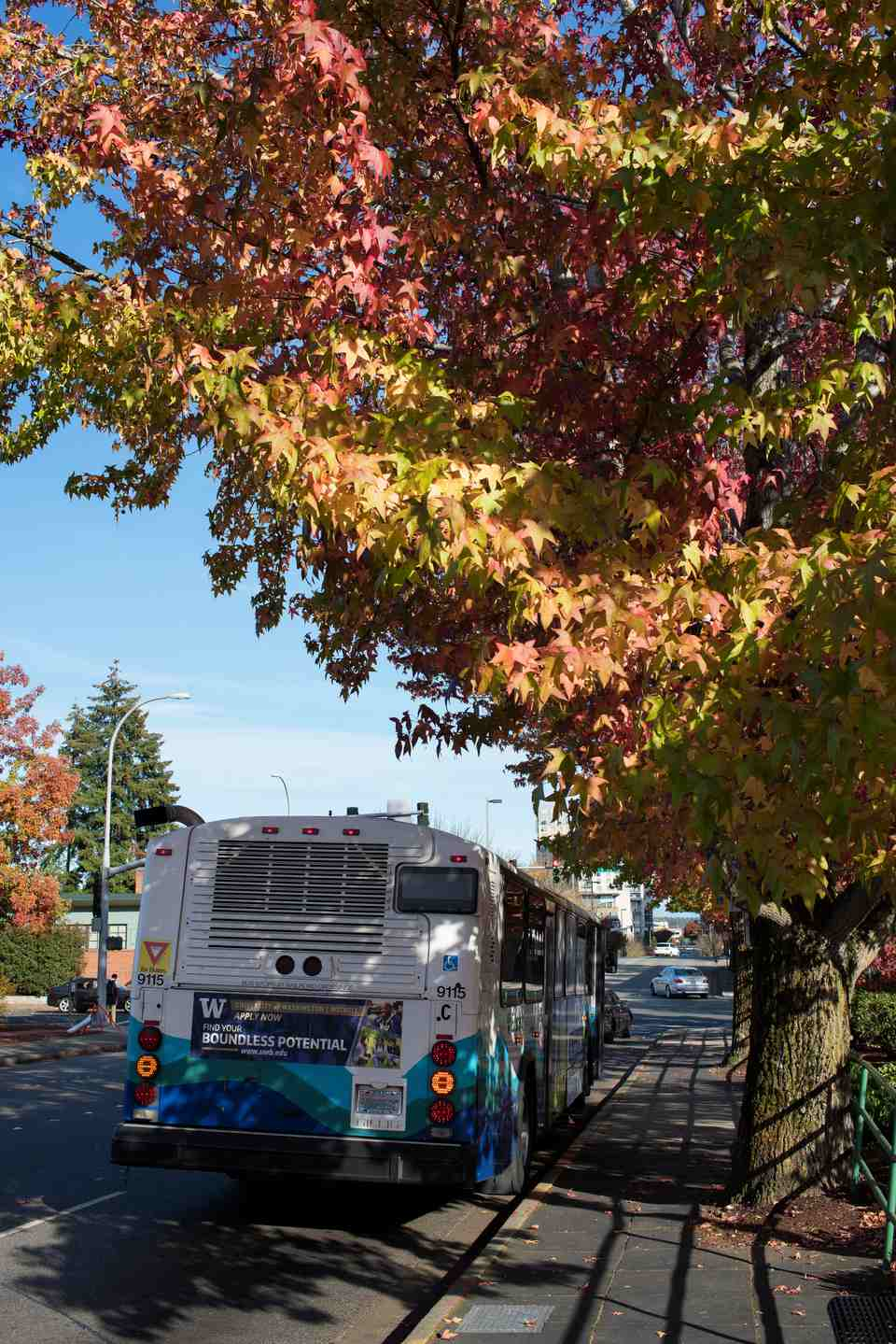 Bus at a Seattle bus stop in Fall