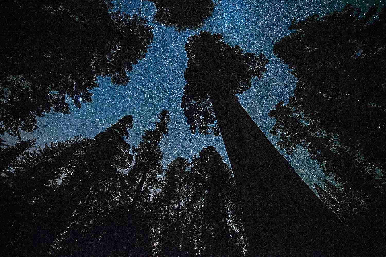 Dải Ngân Trên Grant Grove, Sequoia