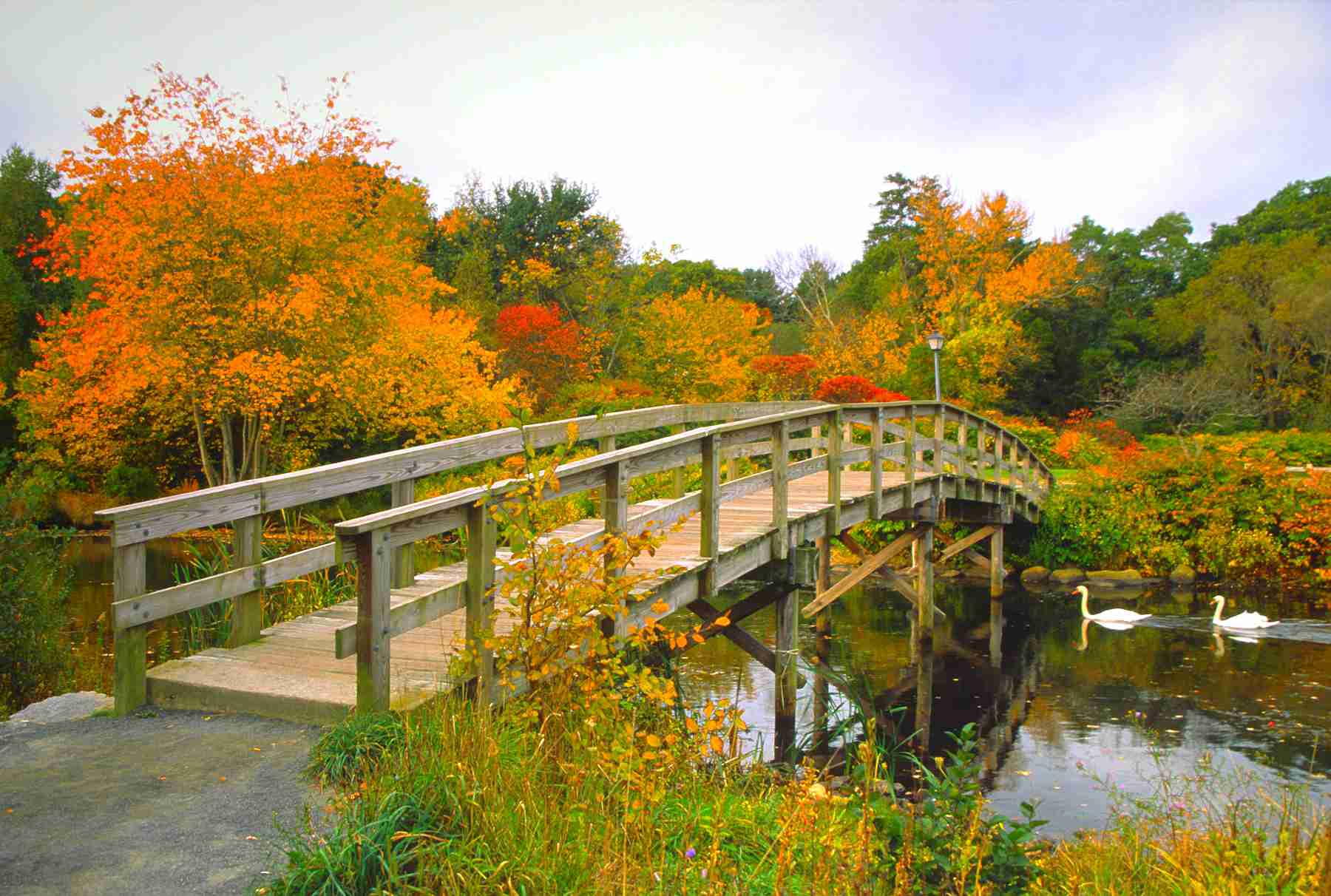 Scenic Autumn bridge with swans on small river in Plymouth, Massachusetts