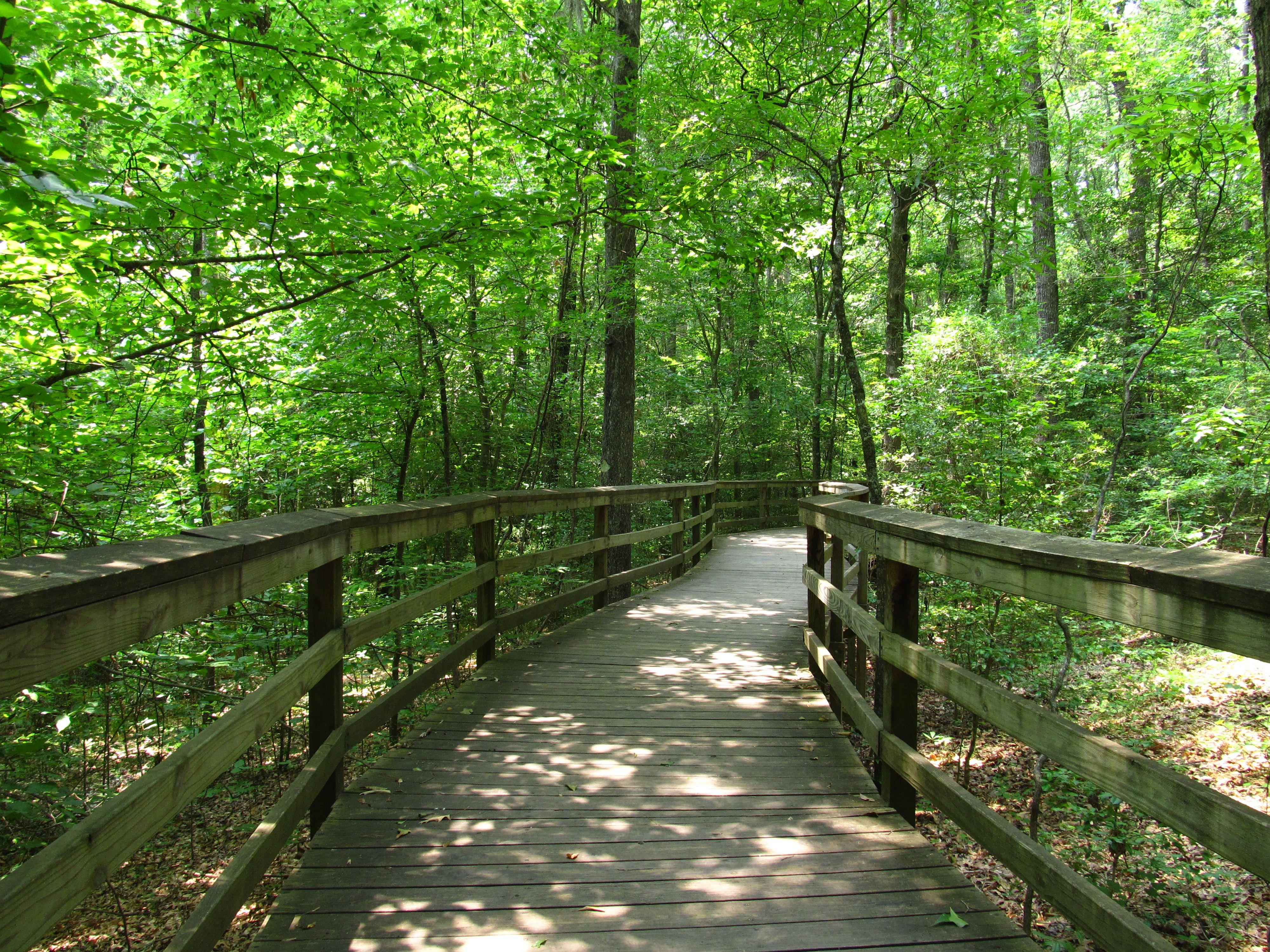 Congaree boardwalk trail