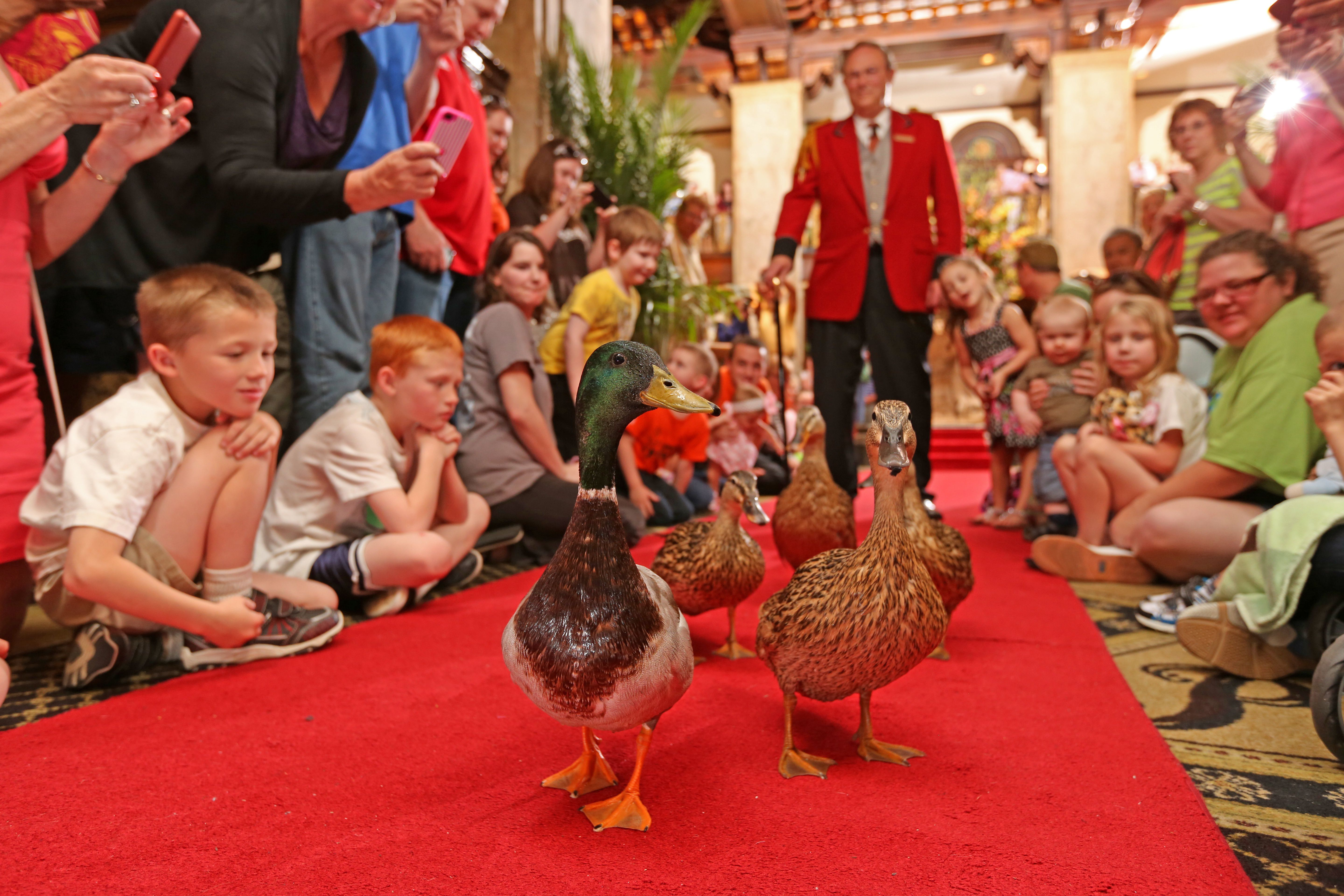 Children watch the ducks walk the red carpet at The Peabody Hotel, followed by the Duckmaster in his red jacket