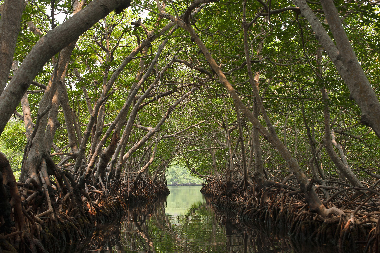 Boat ride through a mangrove forest in Roatan