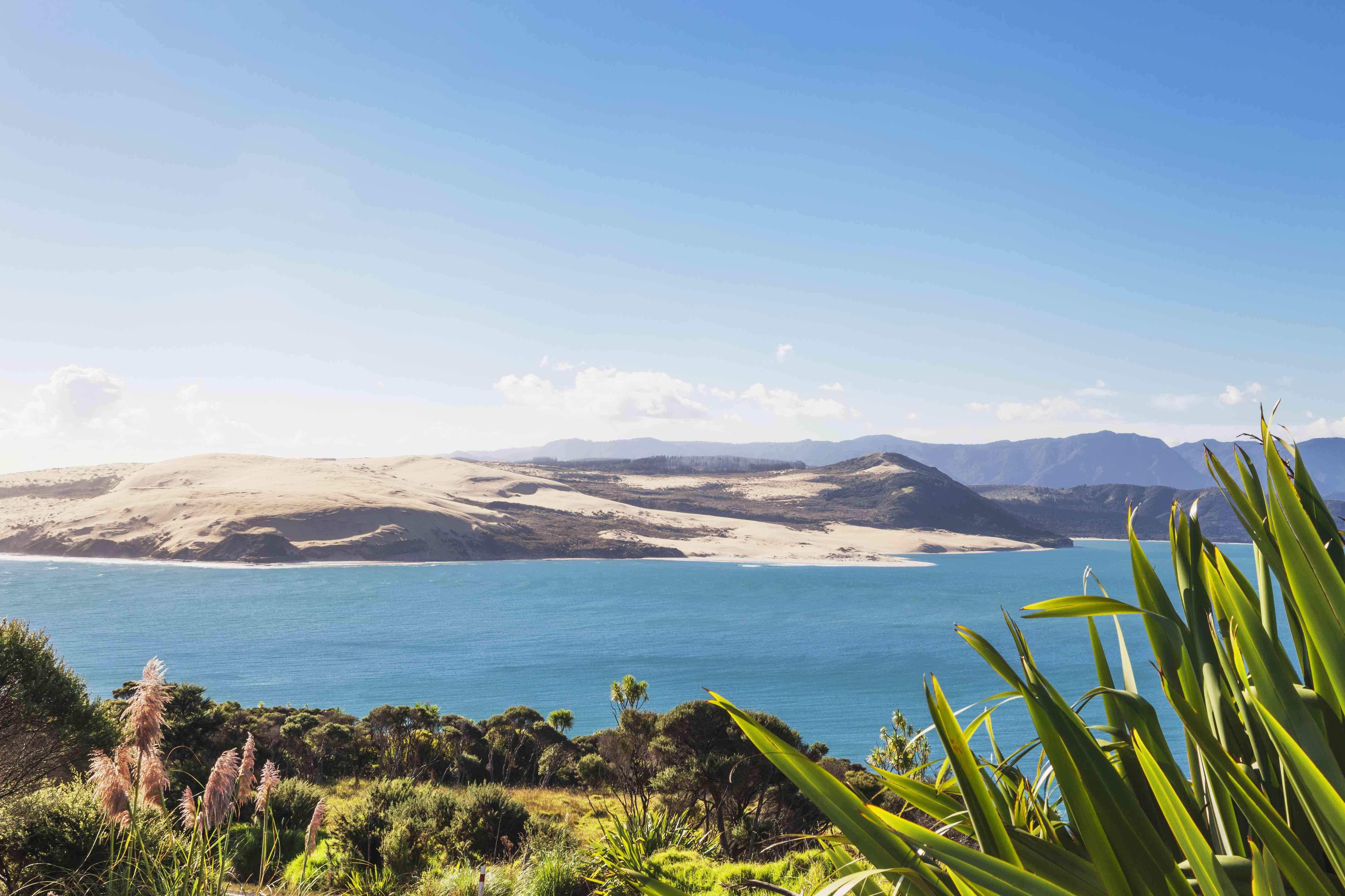 Nueva Zelanda, Isla Norte, Northland, Puerto Hokianga y Duna de Arena Gigante North Head, Lino de Nueva Zelanda, Phormium tenax